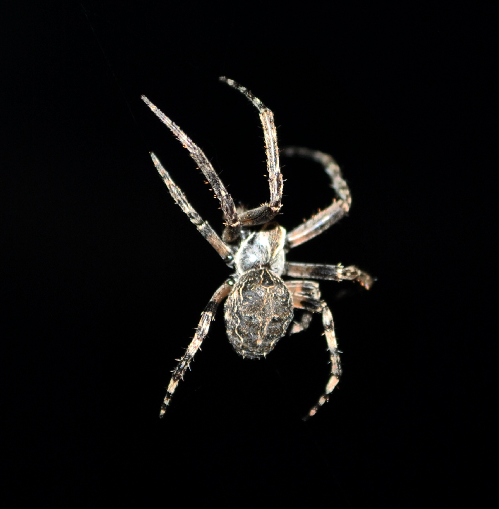 Berlin Spider  by Jeans Brown Photography / Jens Schwarz