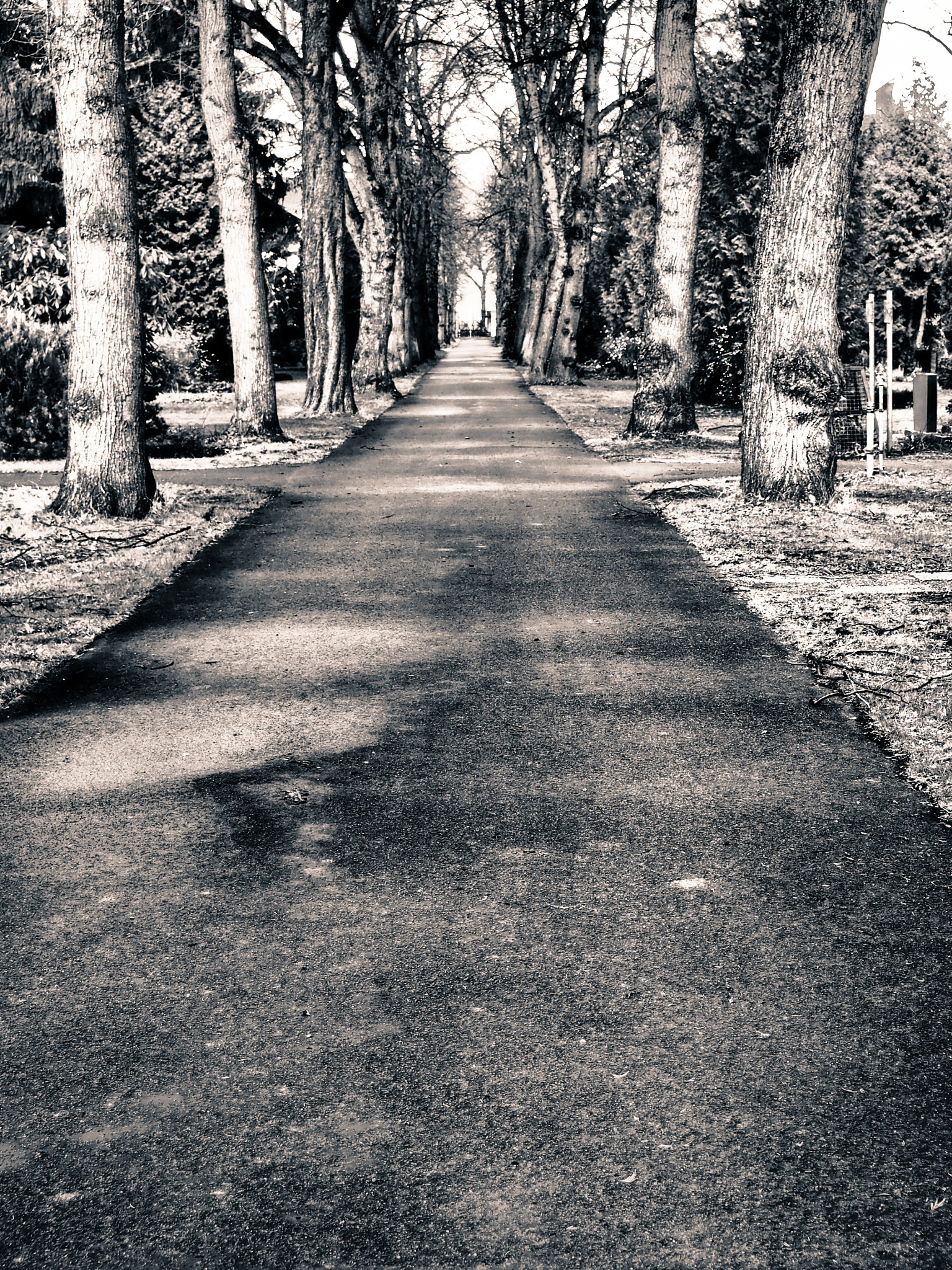 Berlin Tree Avenue Black & White  by Jeans Brown Photography / Jens Schwarz