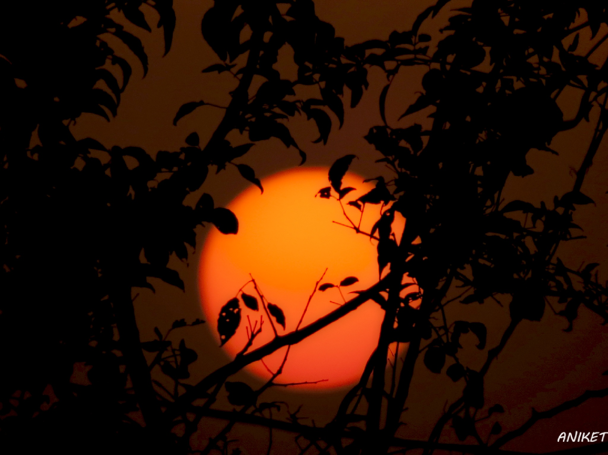 Sunset by Aniket