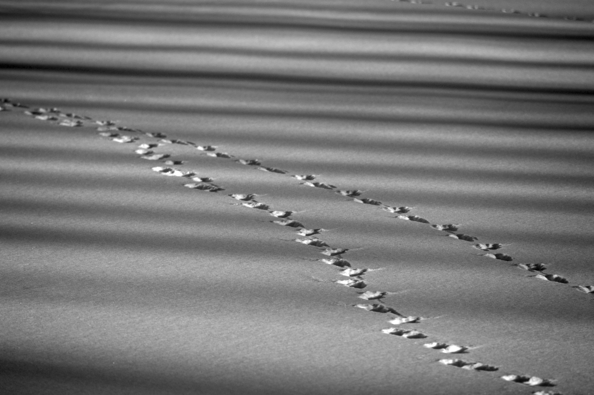 Tracks Across a Frozen Pond by James R McWilliams