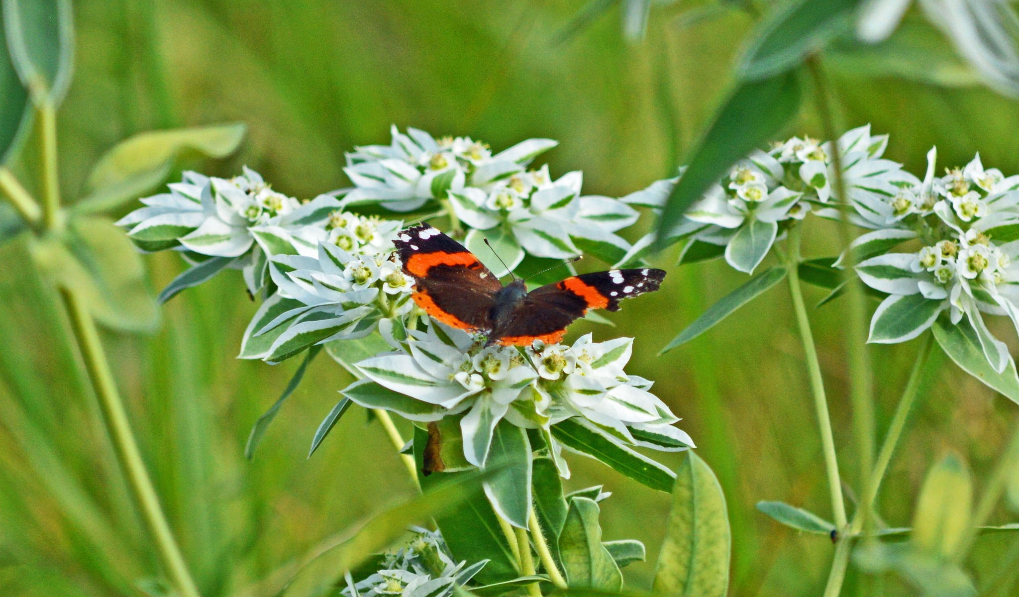 Wildflower Butterfly by James R McWilliams