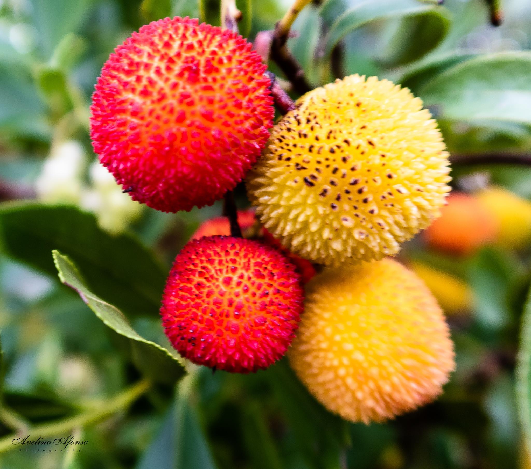 Photo in Macro #medronho #fruto #natureza #arbustro #floresta #macro