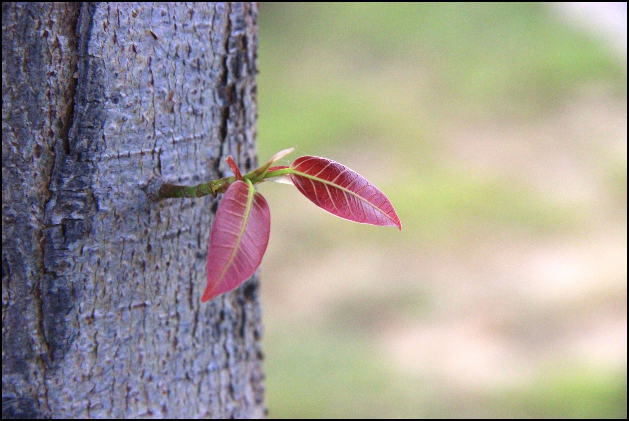 new born leaves  by AntraTripathi