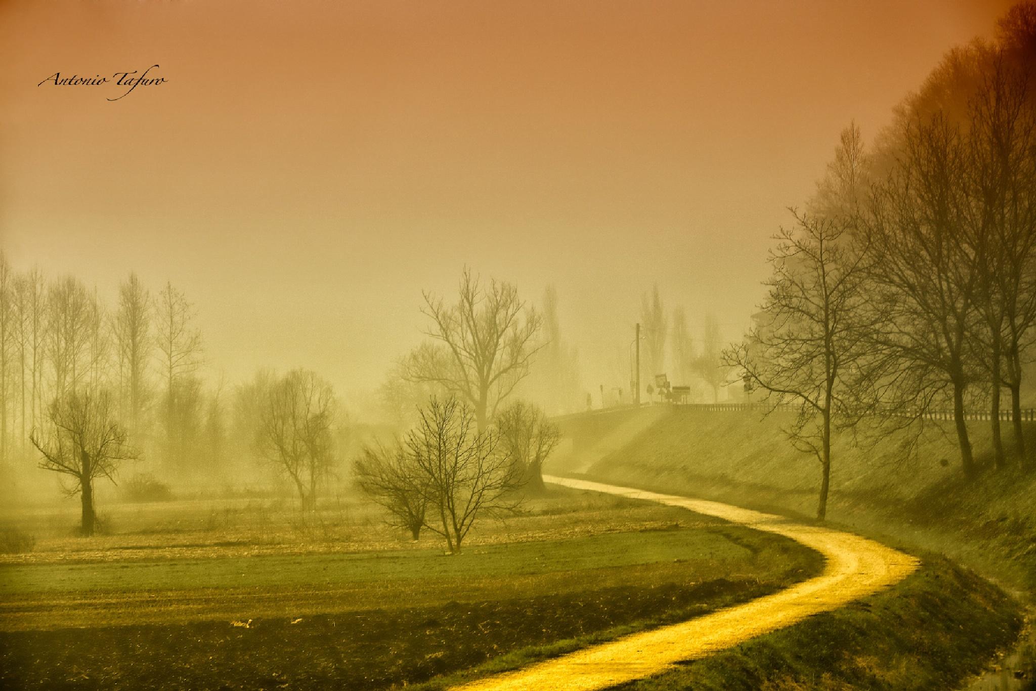 morning fog by Antonio Tafuro