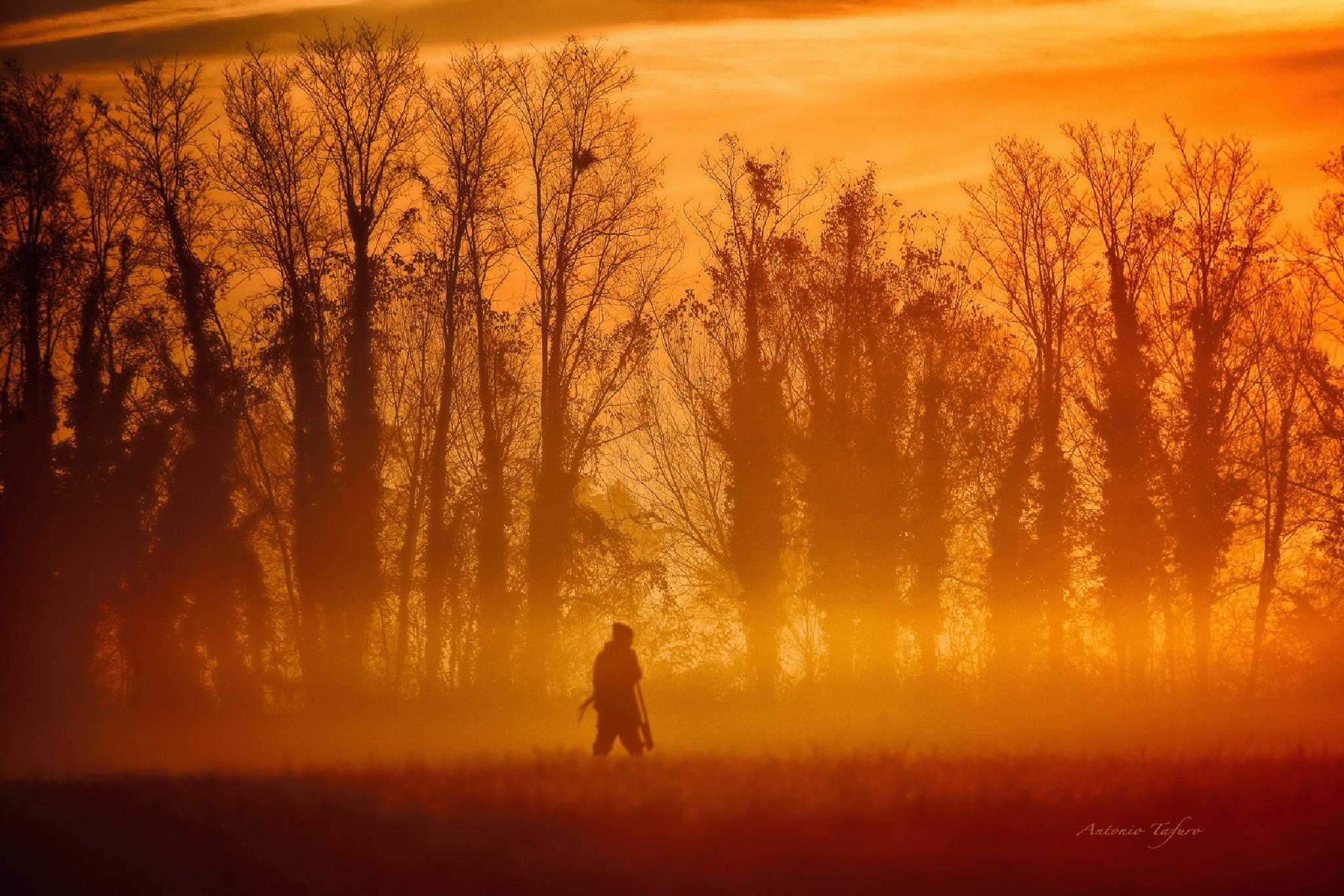 hunting at dawn by Antonio Tafuro