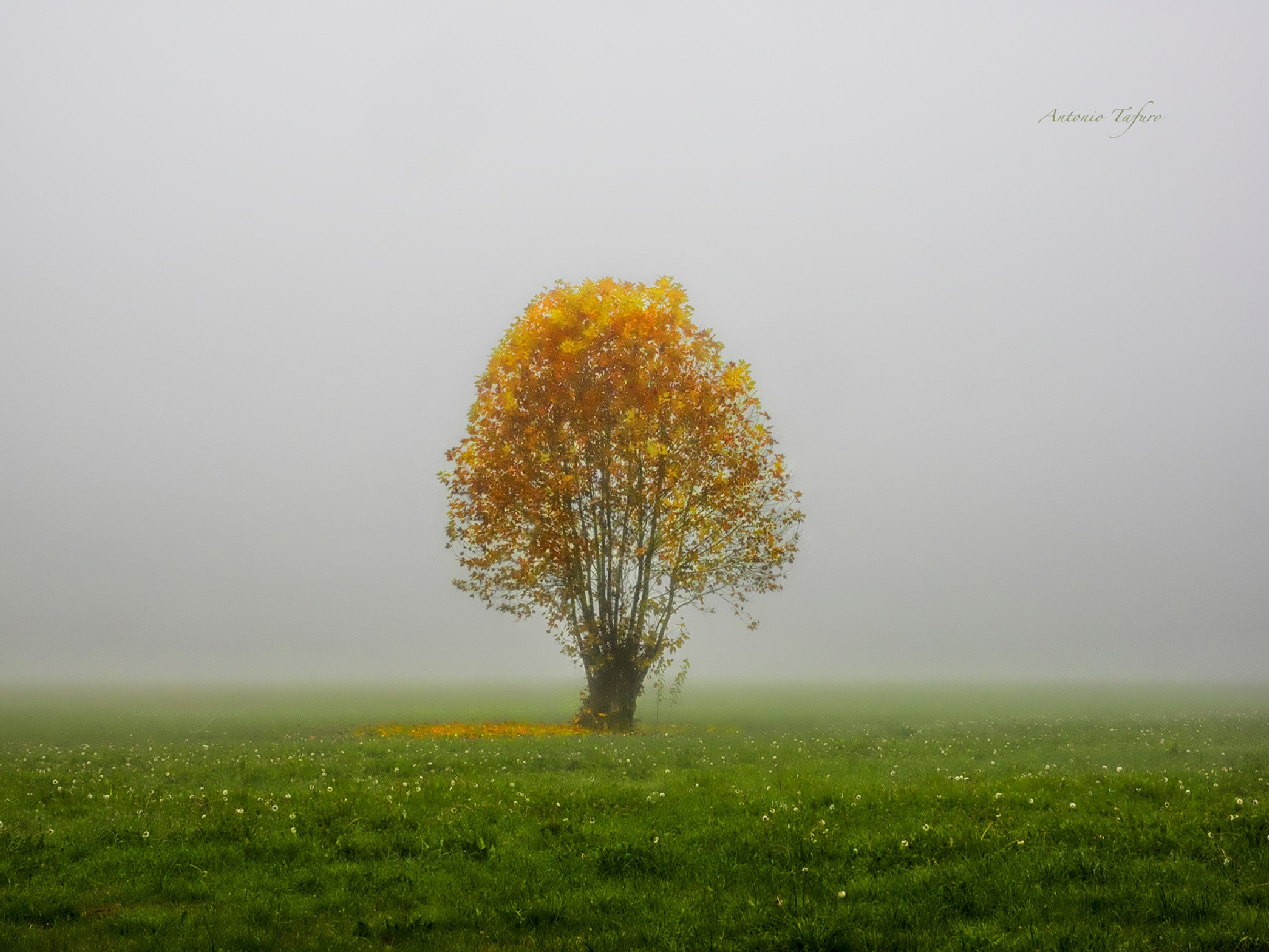 tree in the mist by Antonio Tafuro