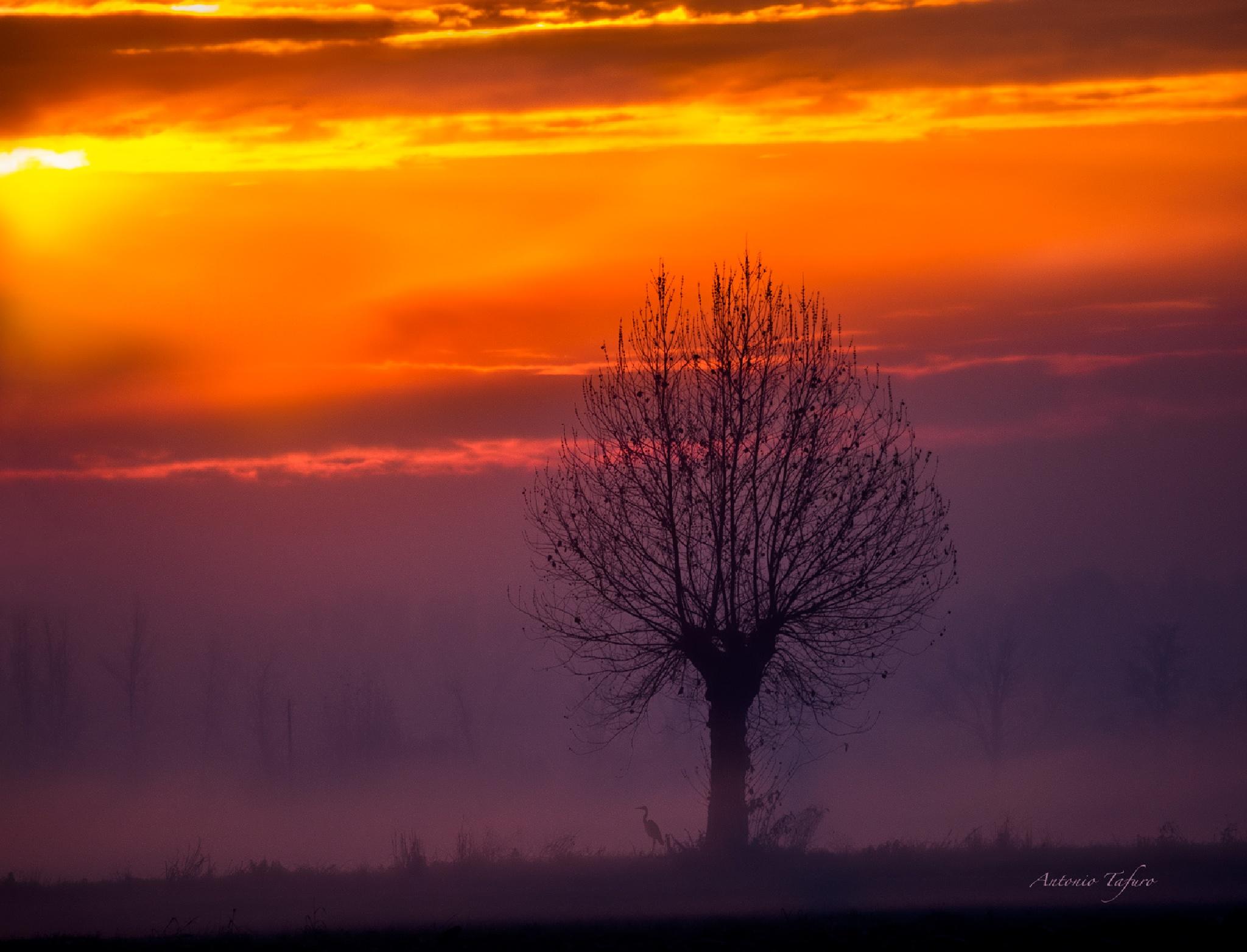 sunrise pink by Antonio Tafuro