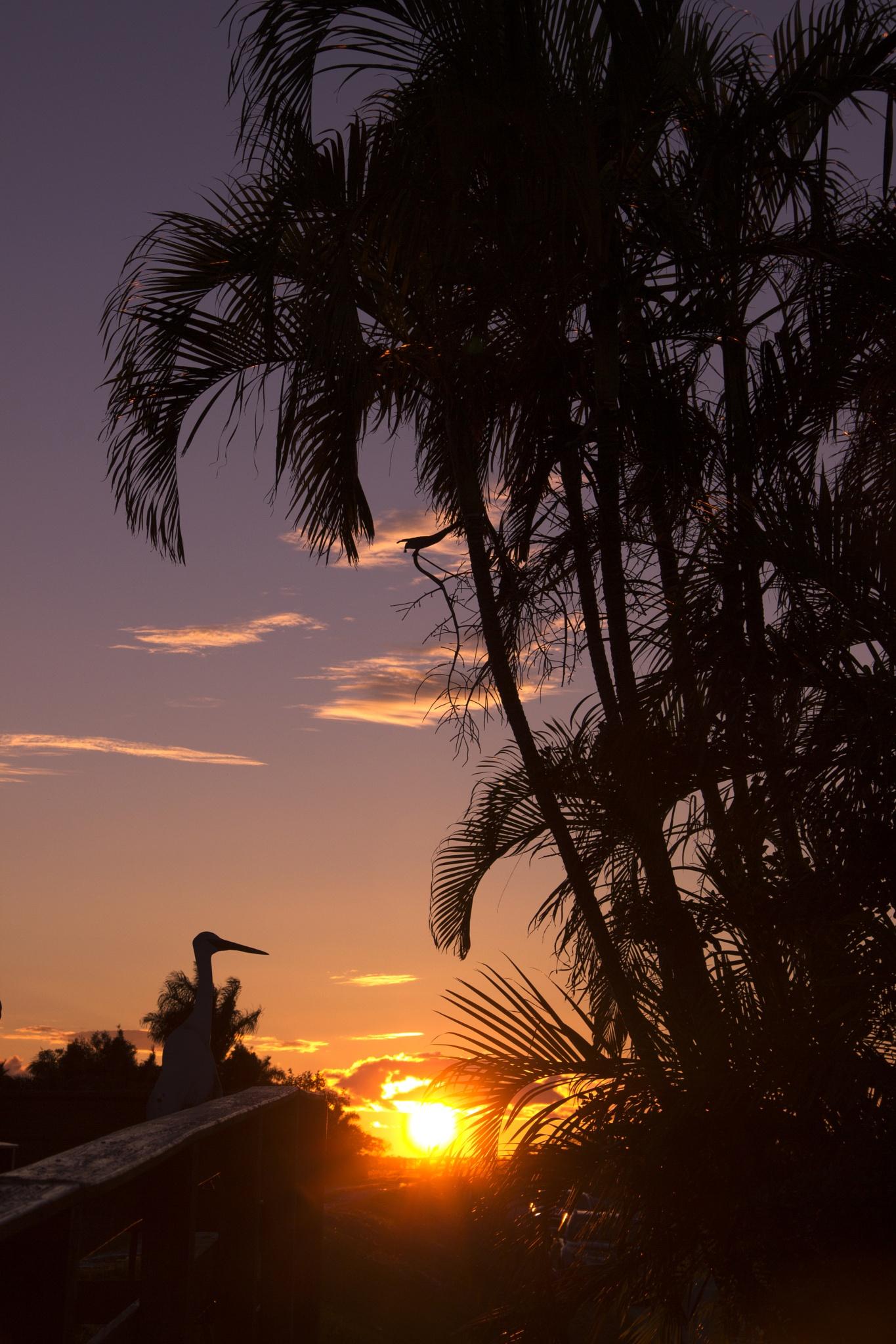 A Florida Everglades sunset... by CMSobi
