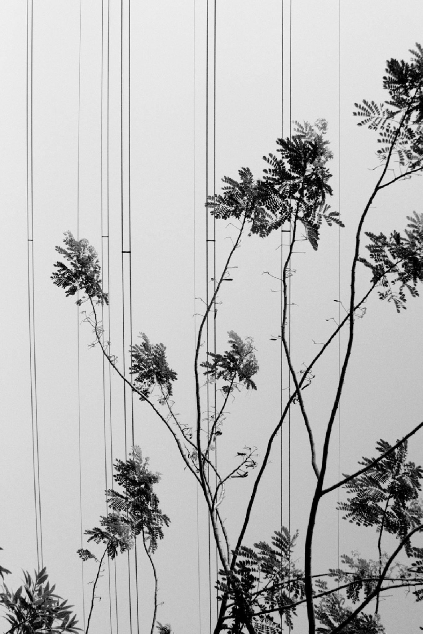 Tree & wire by anthonyphotoworks