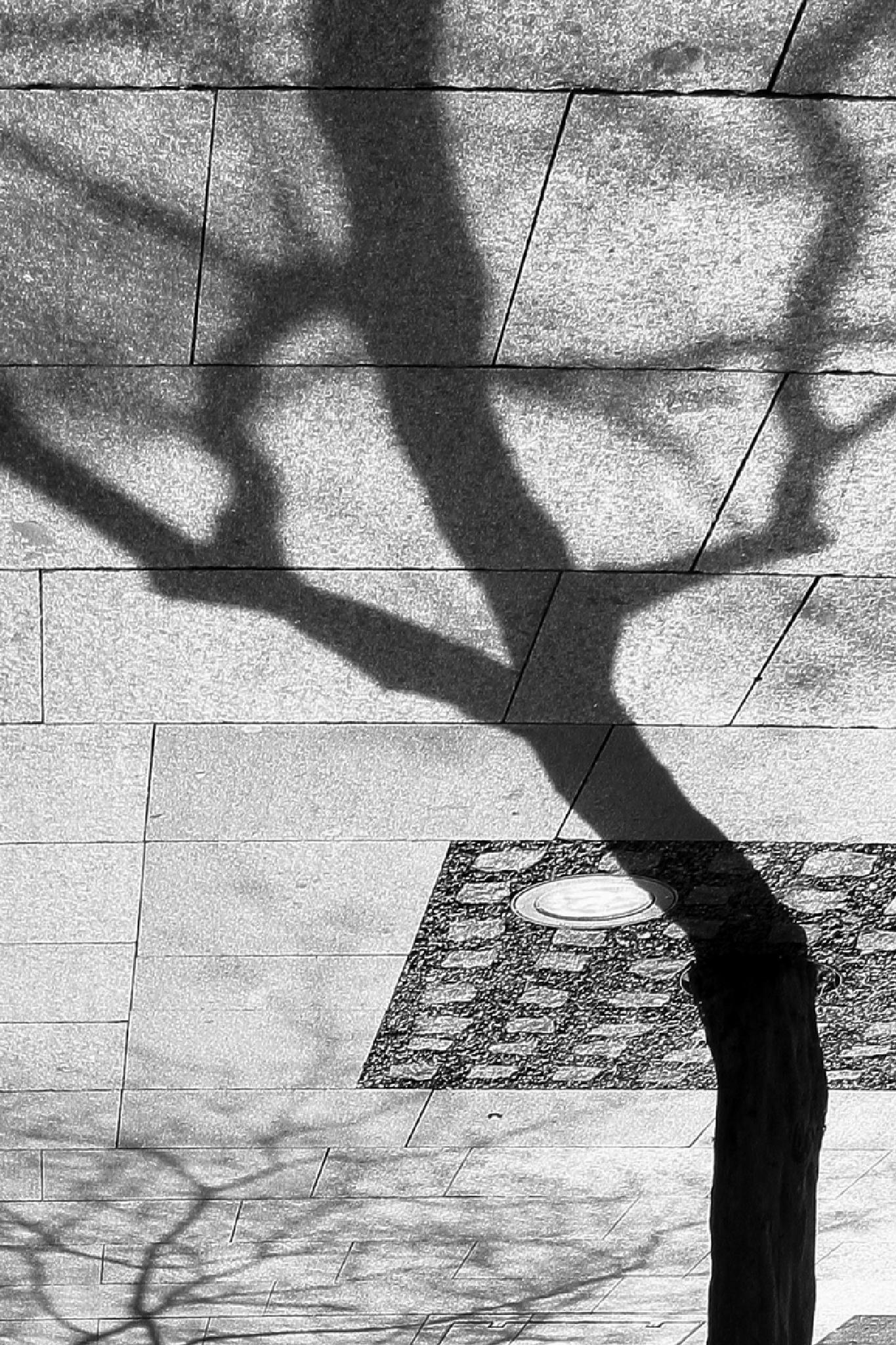 Photo in Fine Art #tree #shadow #reflection #rotation #90 degree #black & white #art & composition