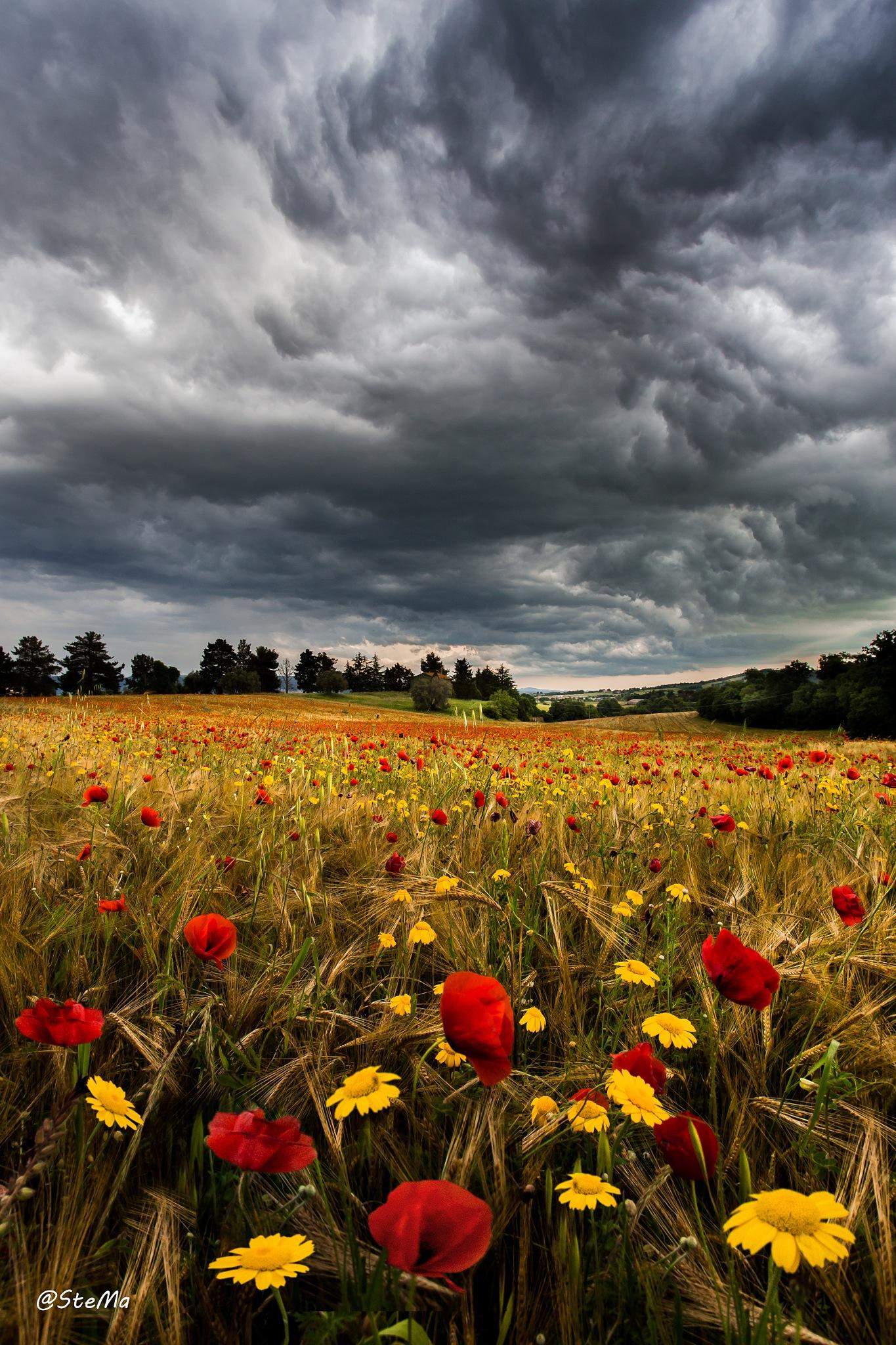 Arriva il temporale  by stefanomarsiliani56