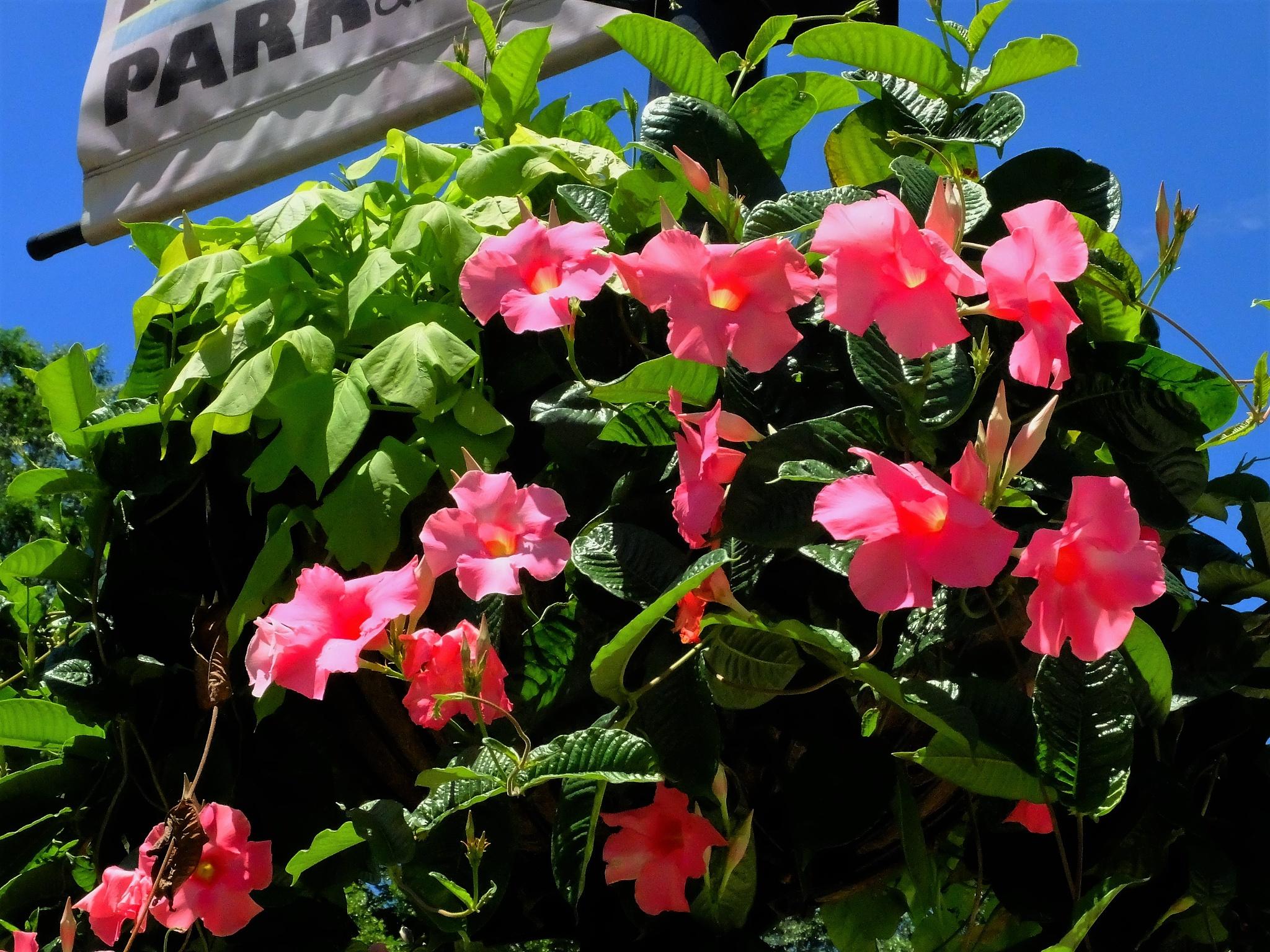 A bushel of pink flowers by vmunoz