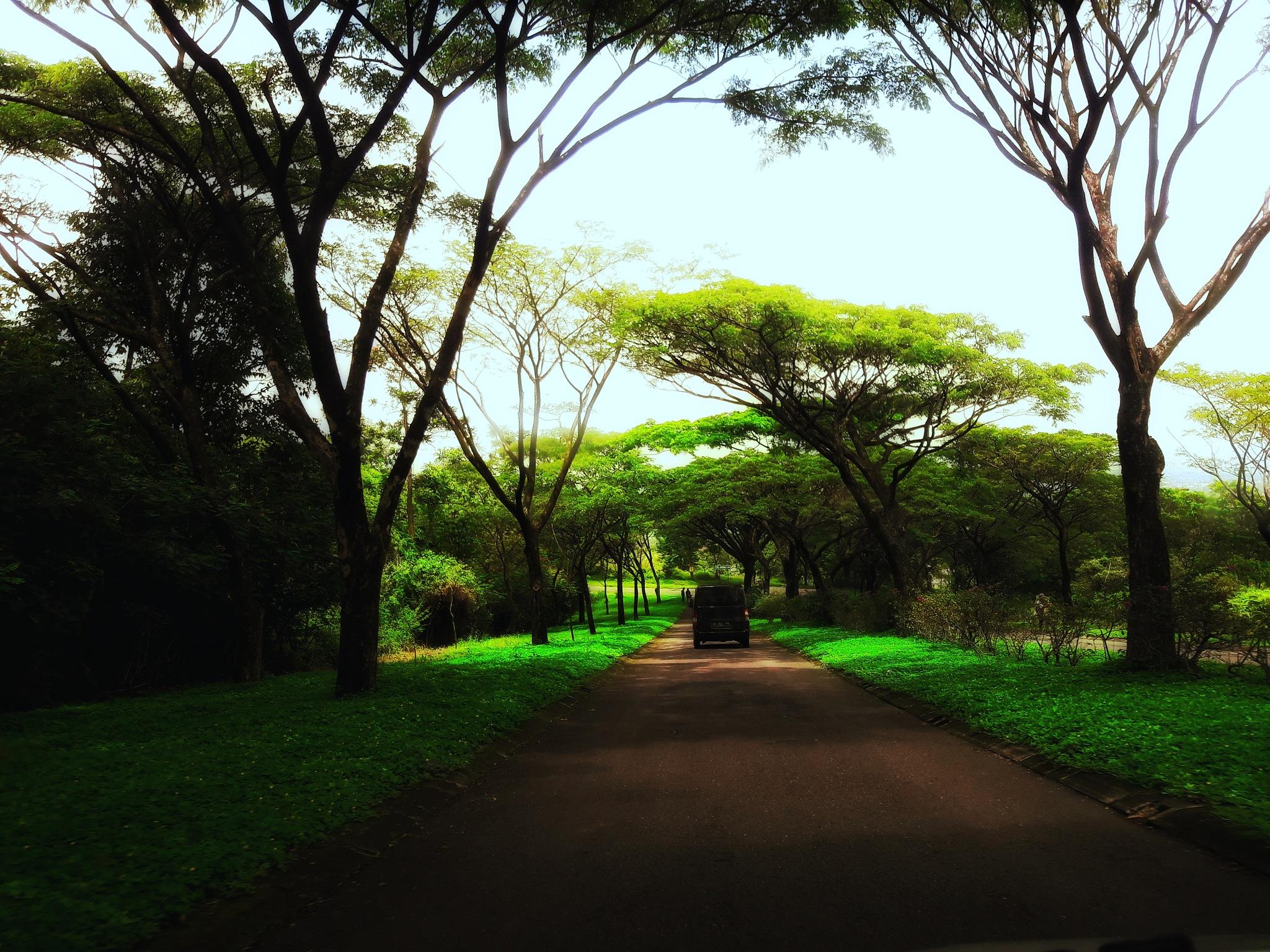 on my way by Mutiara