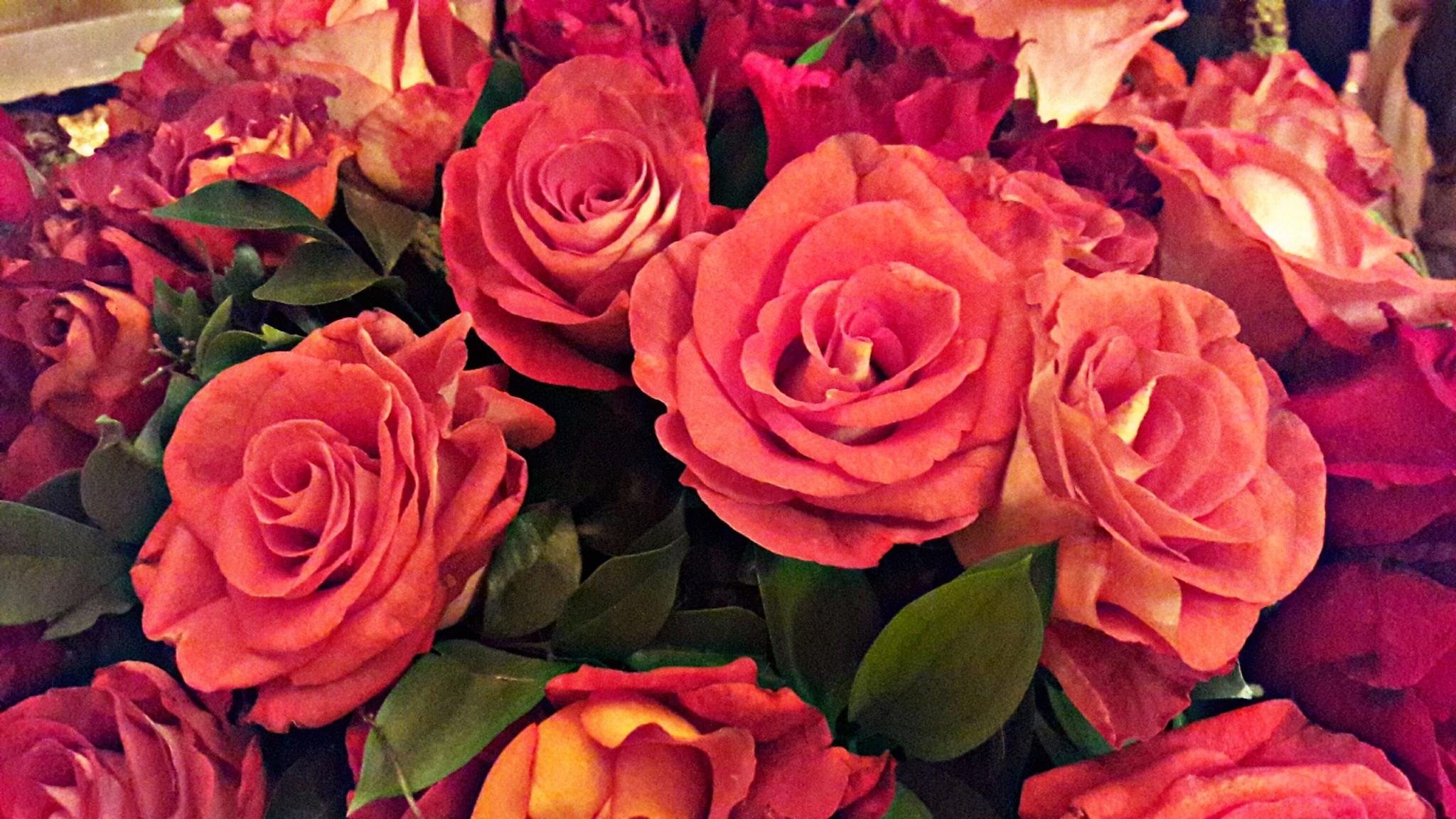 roses by Mutiara