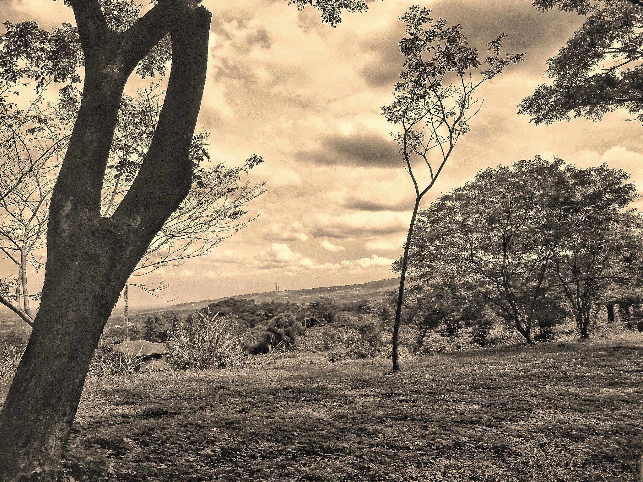Untitled by Mutiara