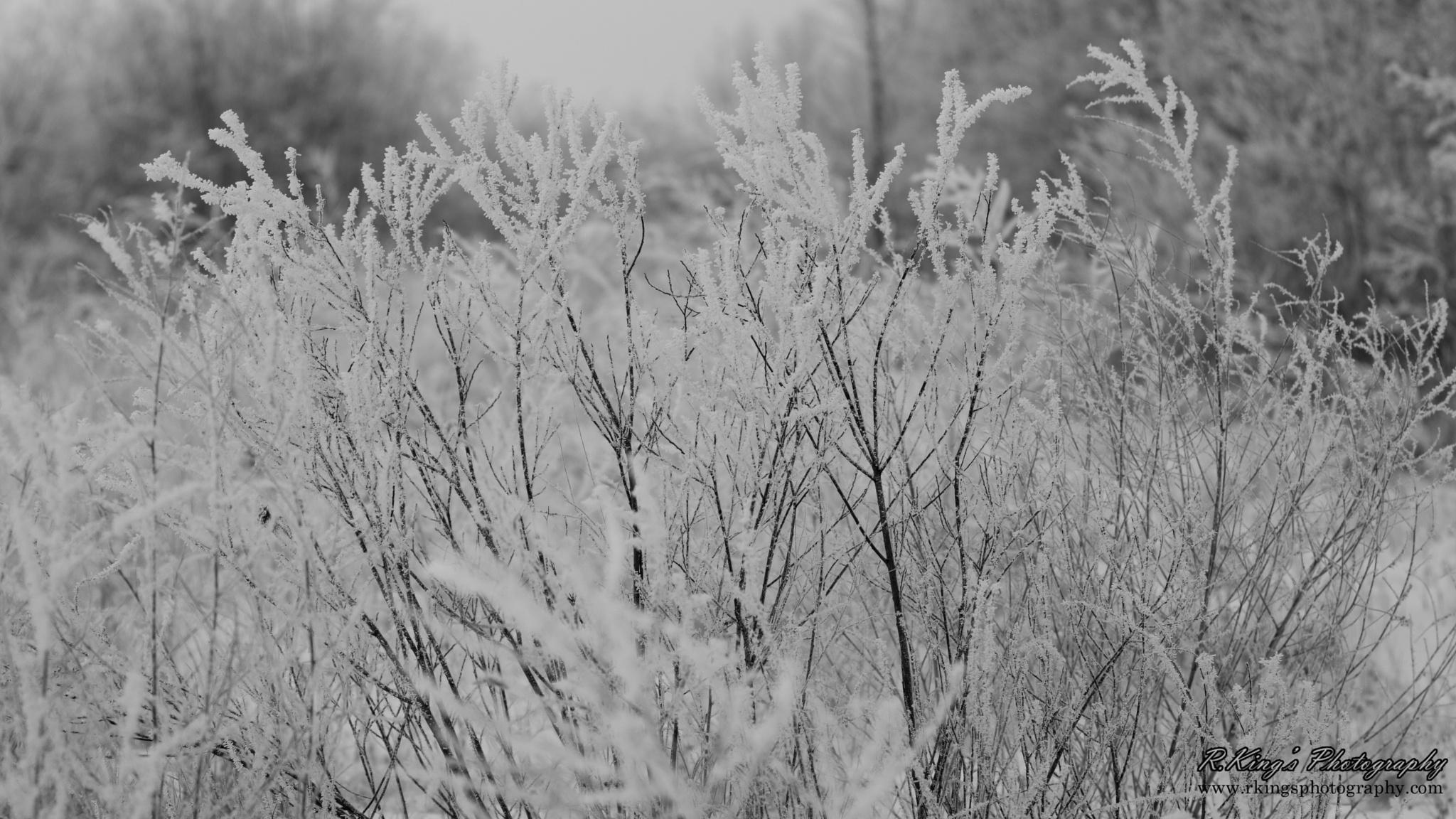 Grey days of winter by Rodney_King