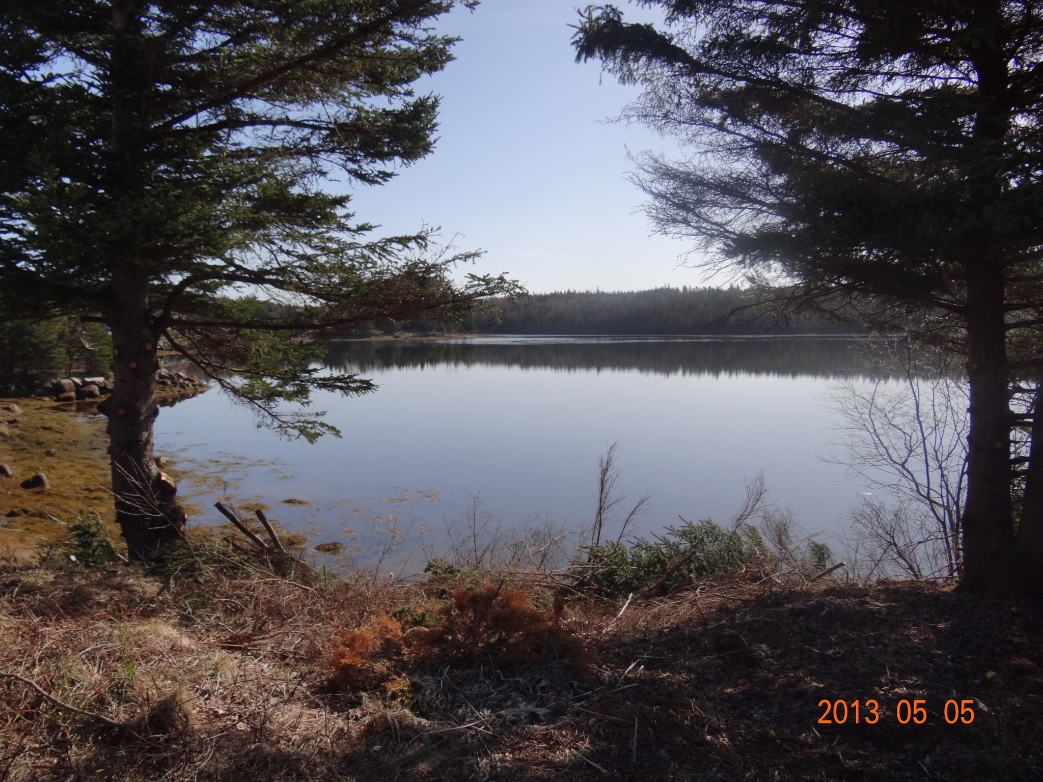 Prospect Bay  by Darlene Dorey