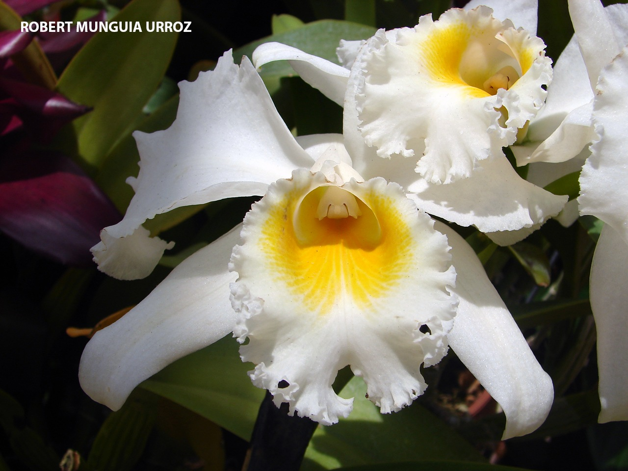 FLOWERS by Robert Munguia