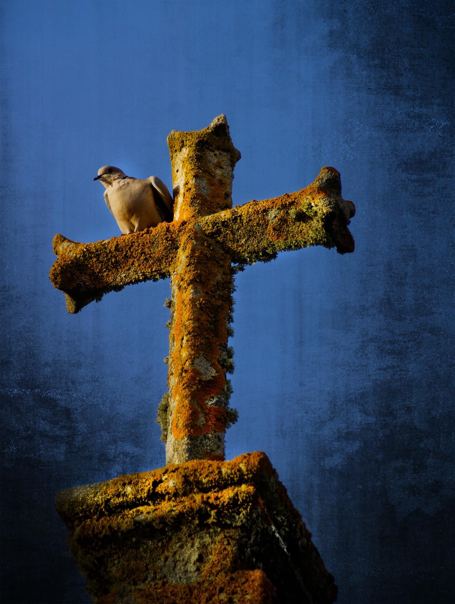 Ocell by Pilar