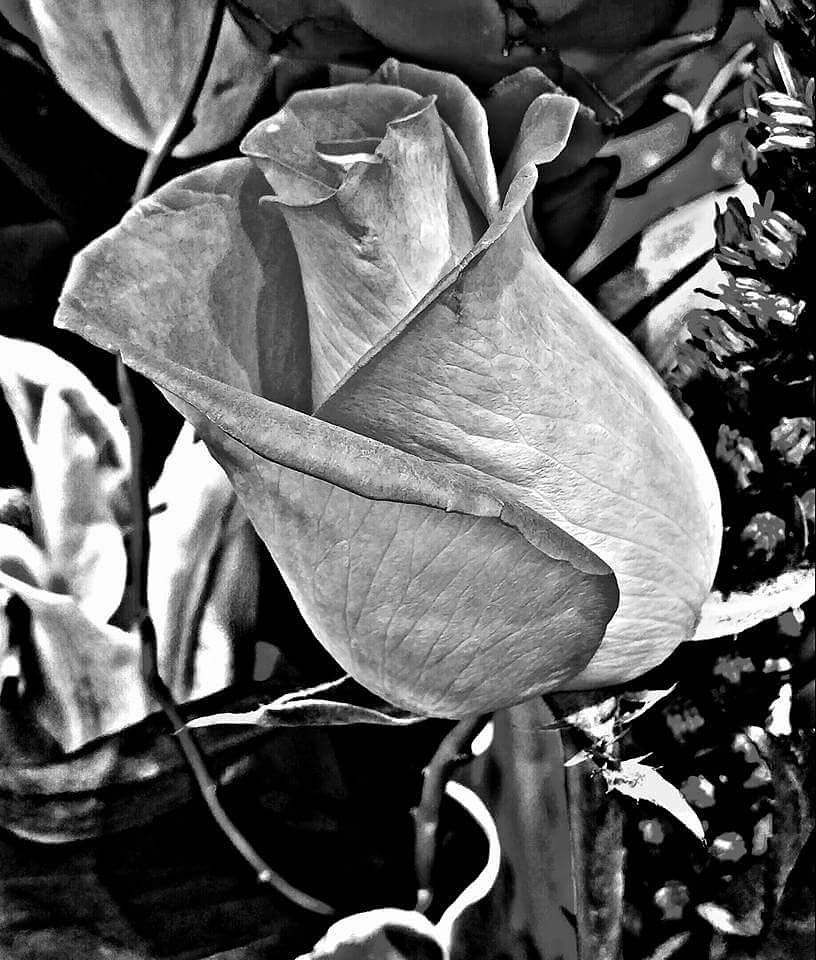 Untitled by fotophreak