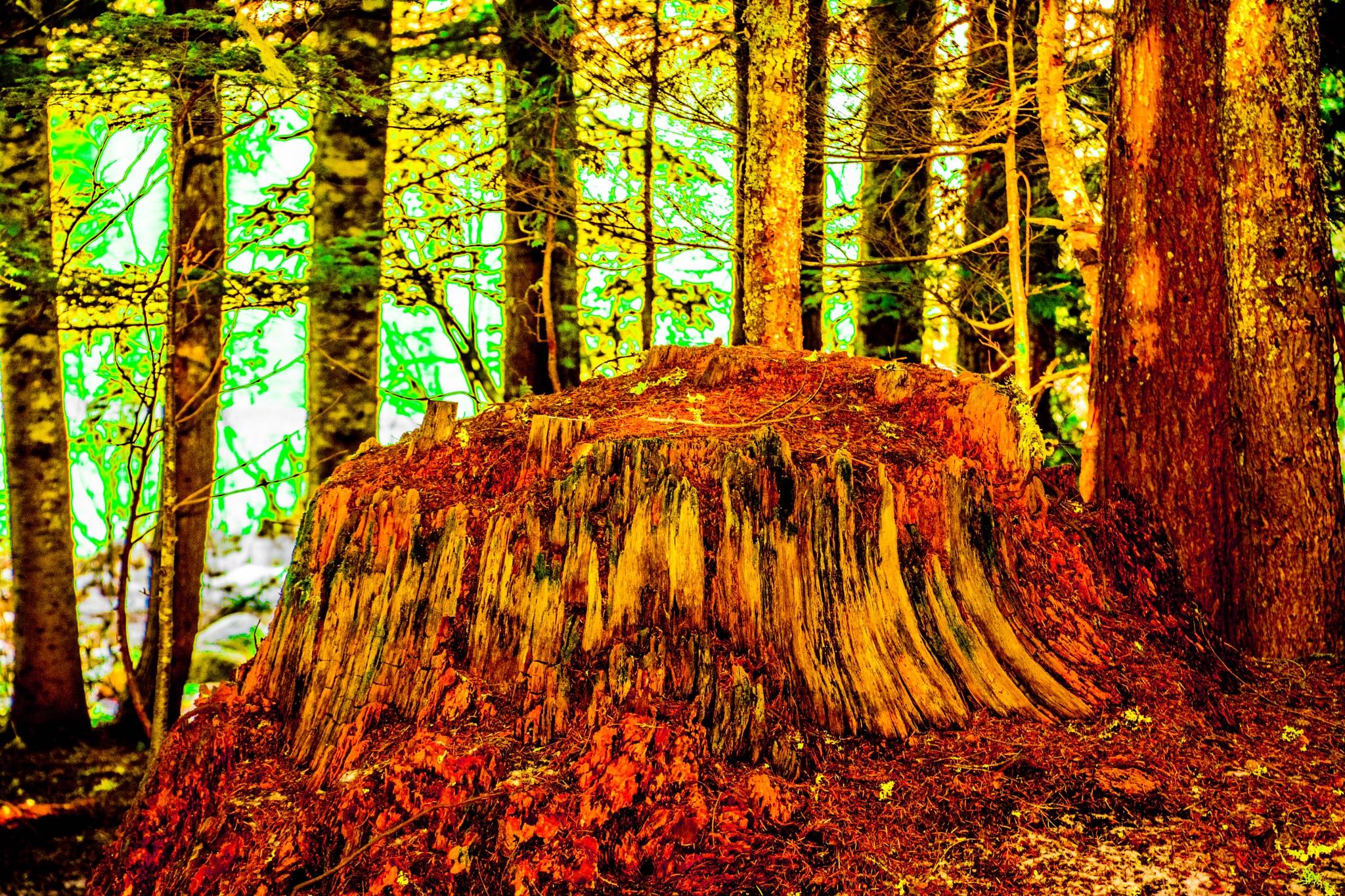 once a tree by Gillianne Fields