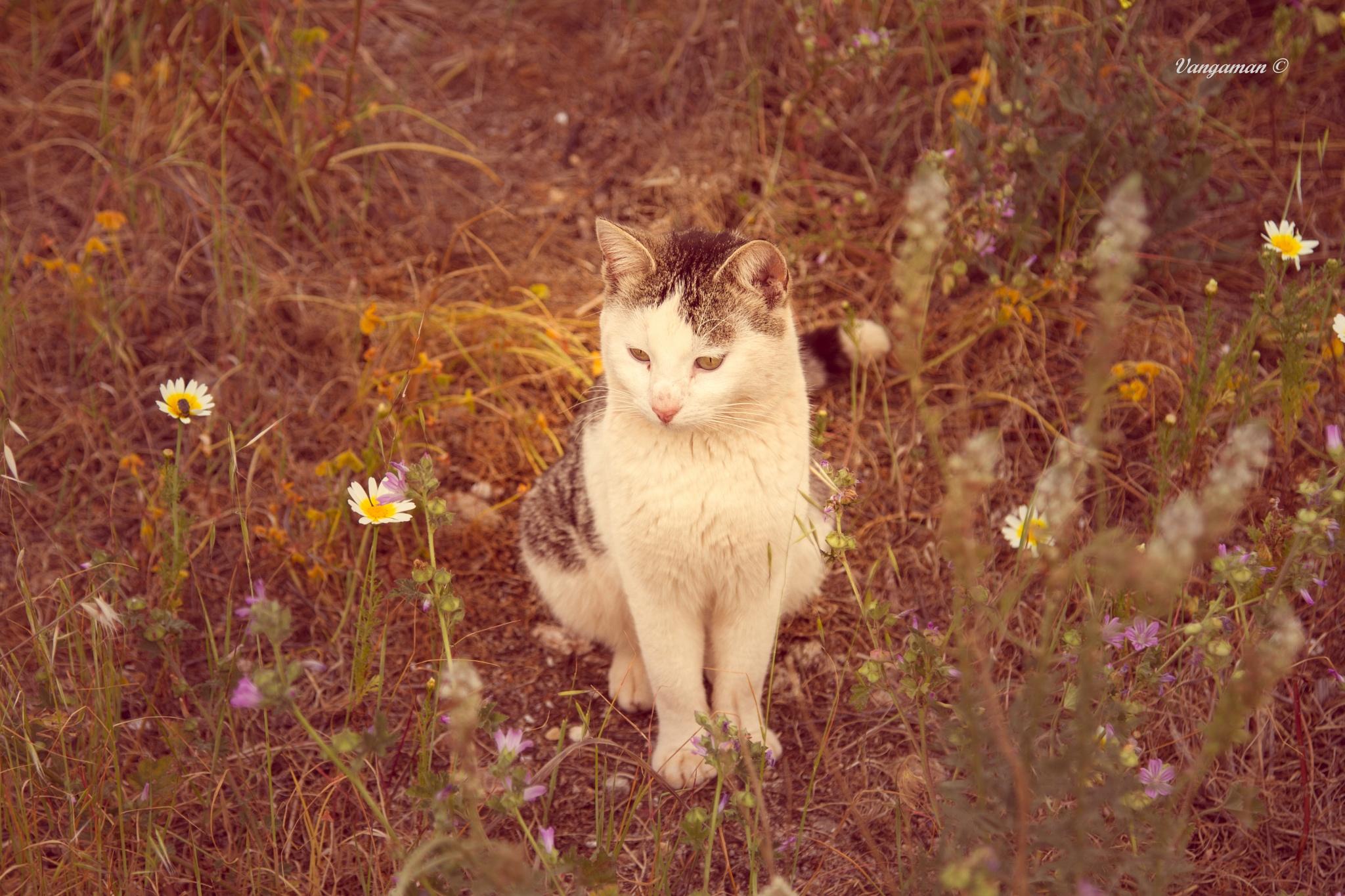 Vangaman-animals by Evangelos Astropalitis