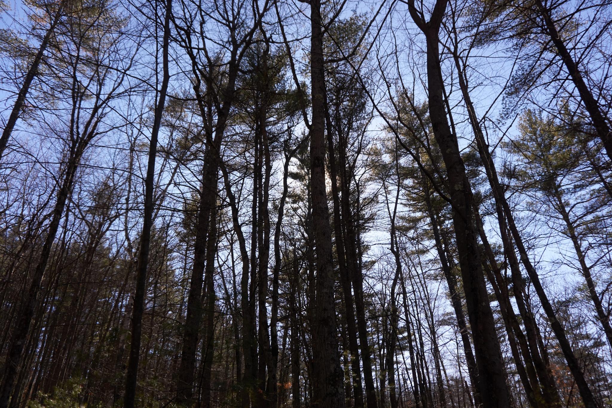 woods by Jerry Pandolfi