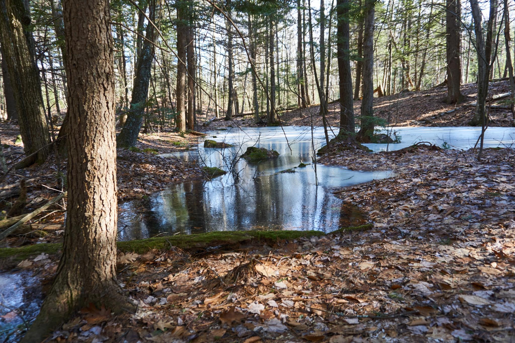 puddle by Jerry Pandolfi