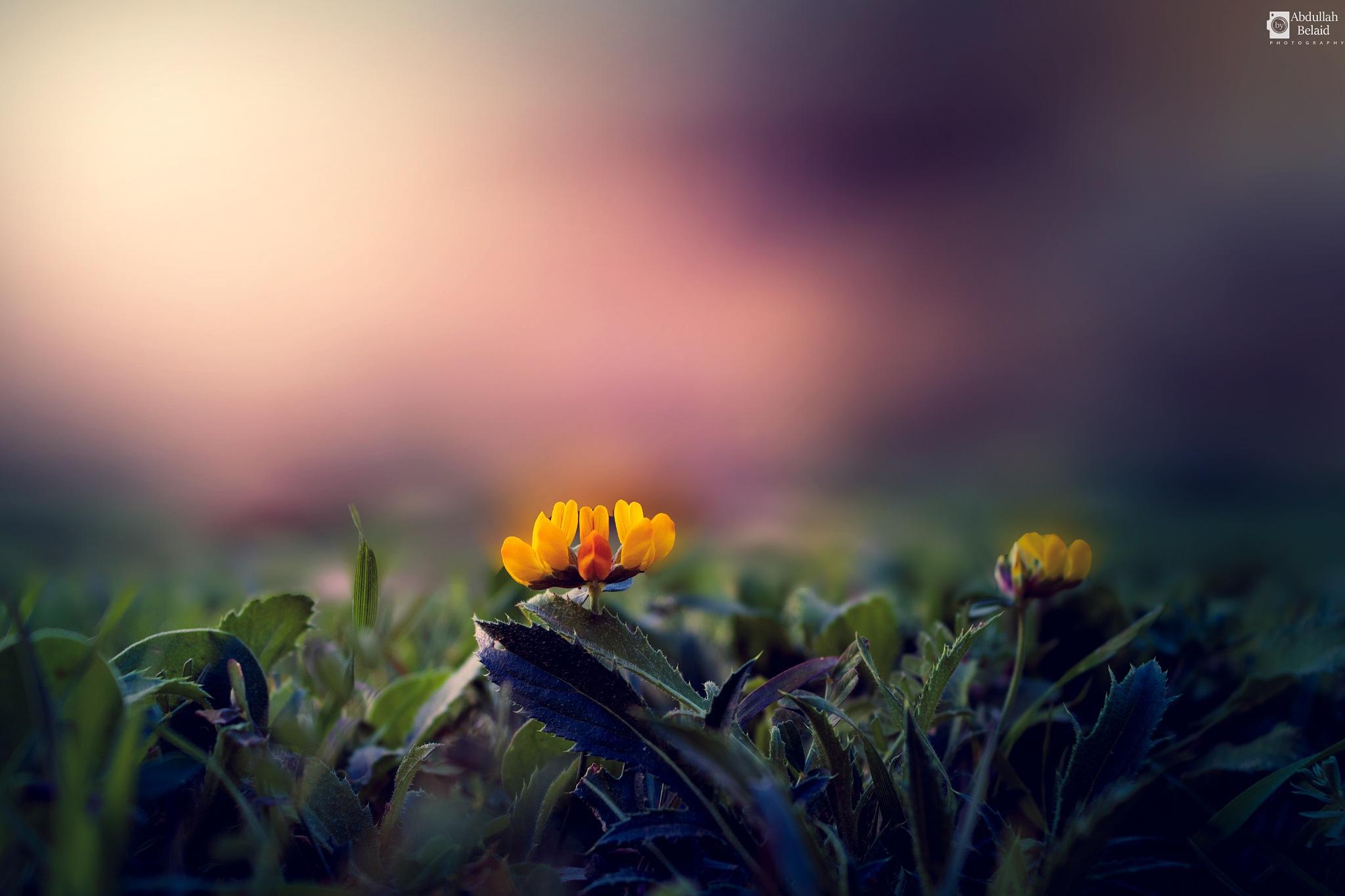 Photo in Macro #yellow #close #green #nature #flower #libya