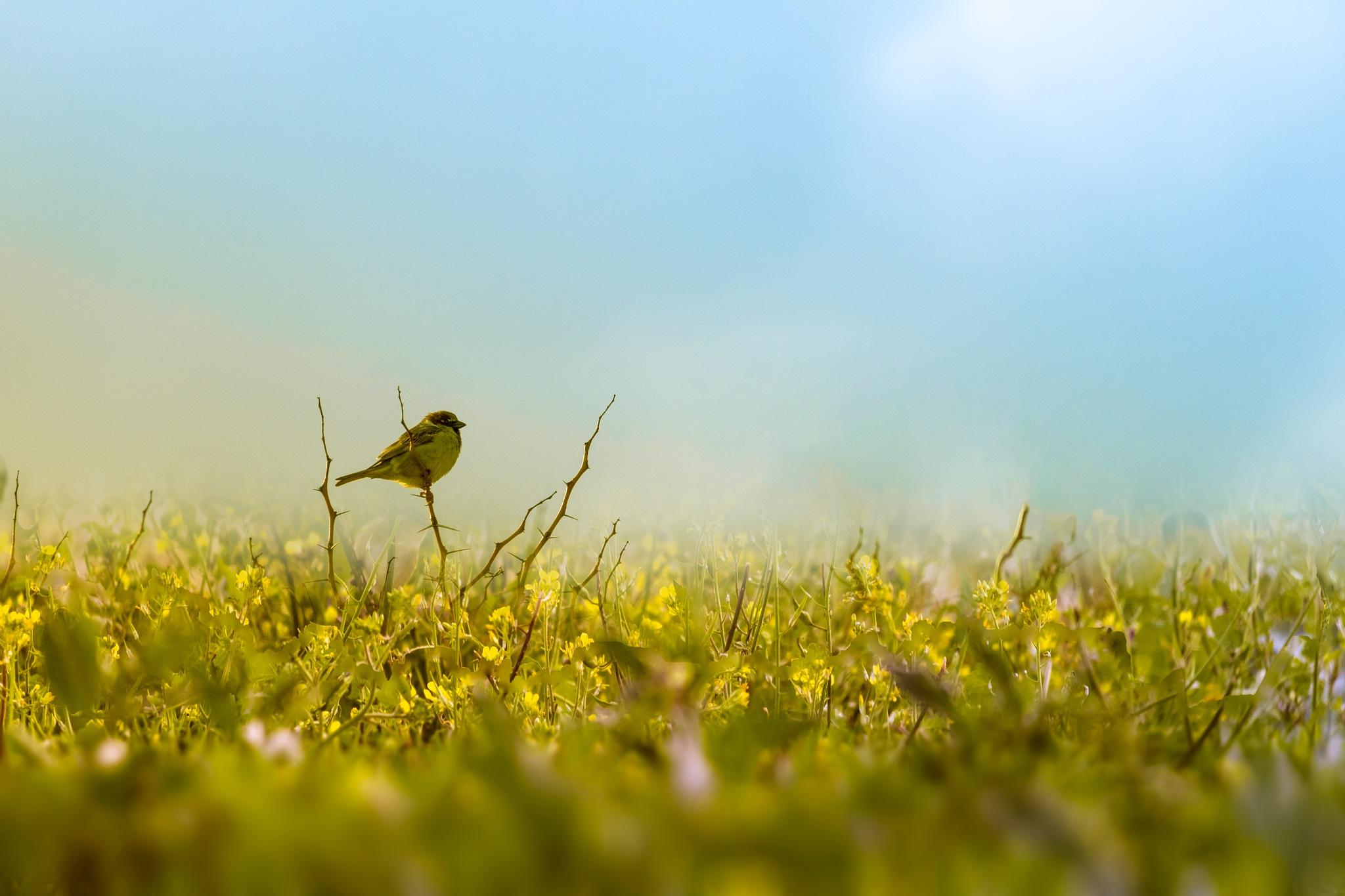 Photo in Animal #bird #flower #libya