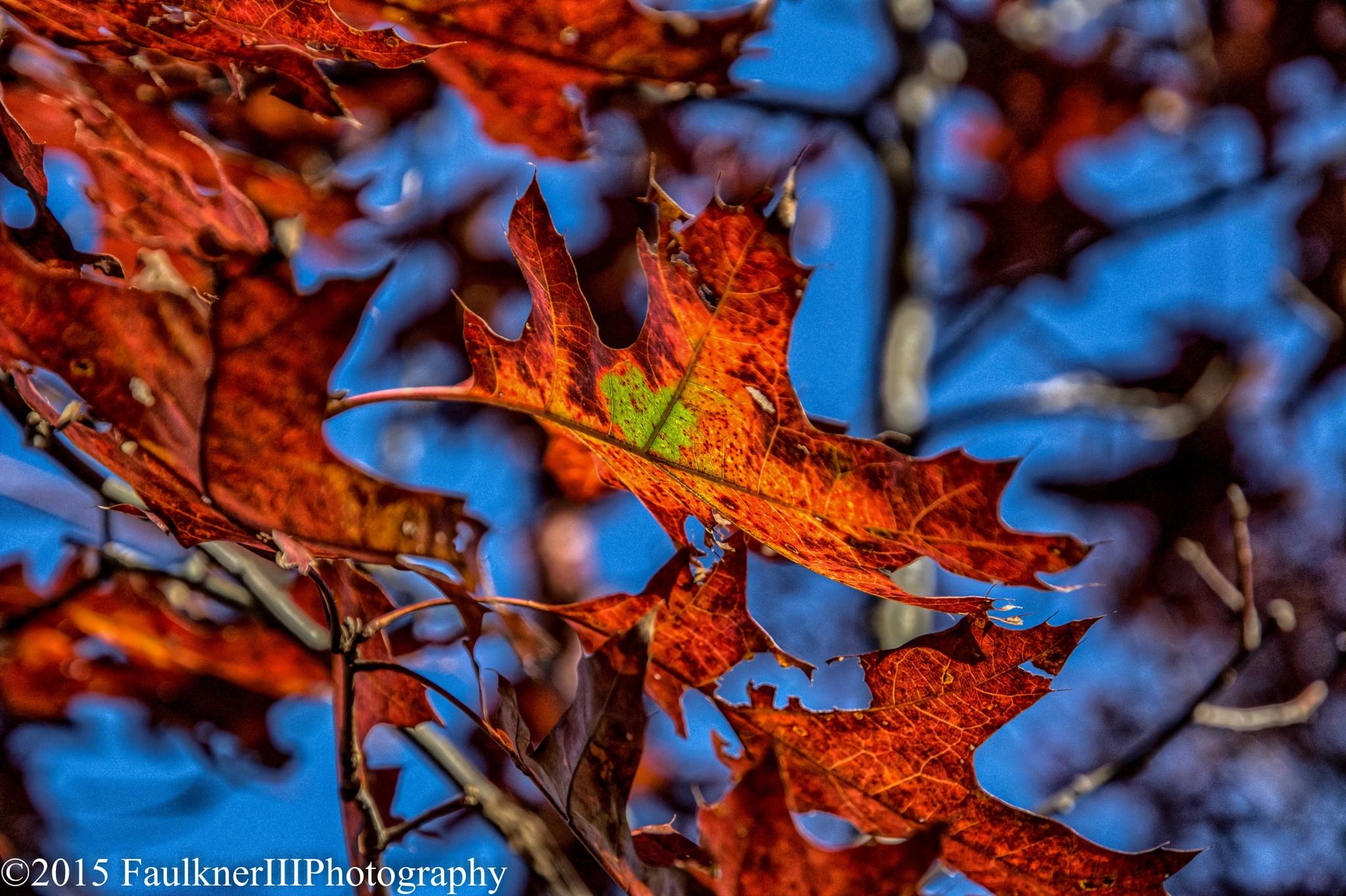 autumn leaf by Frederick Faulkner III