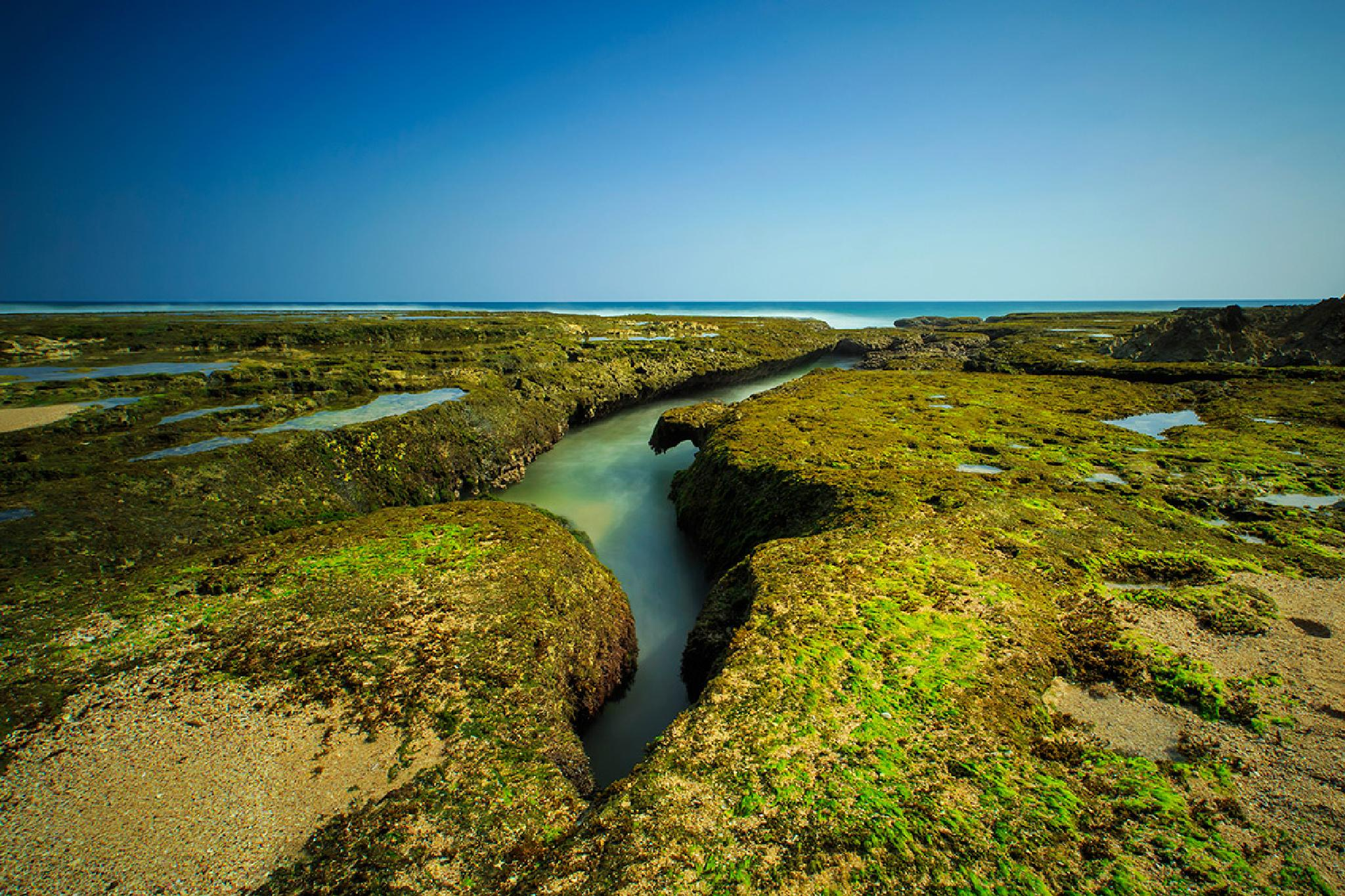 blue sky and green moss by franshendrik Tambunan