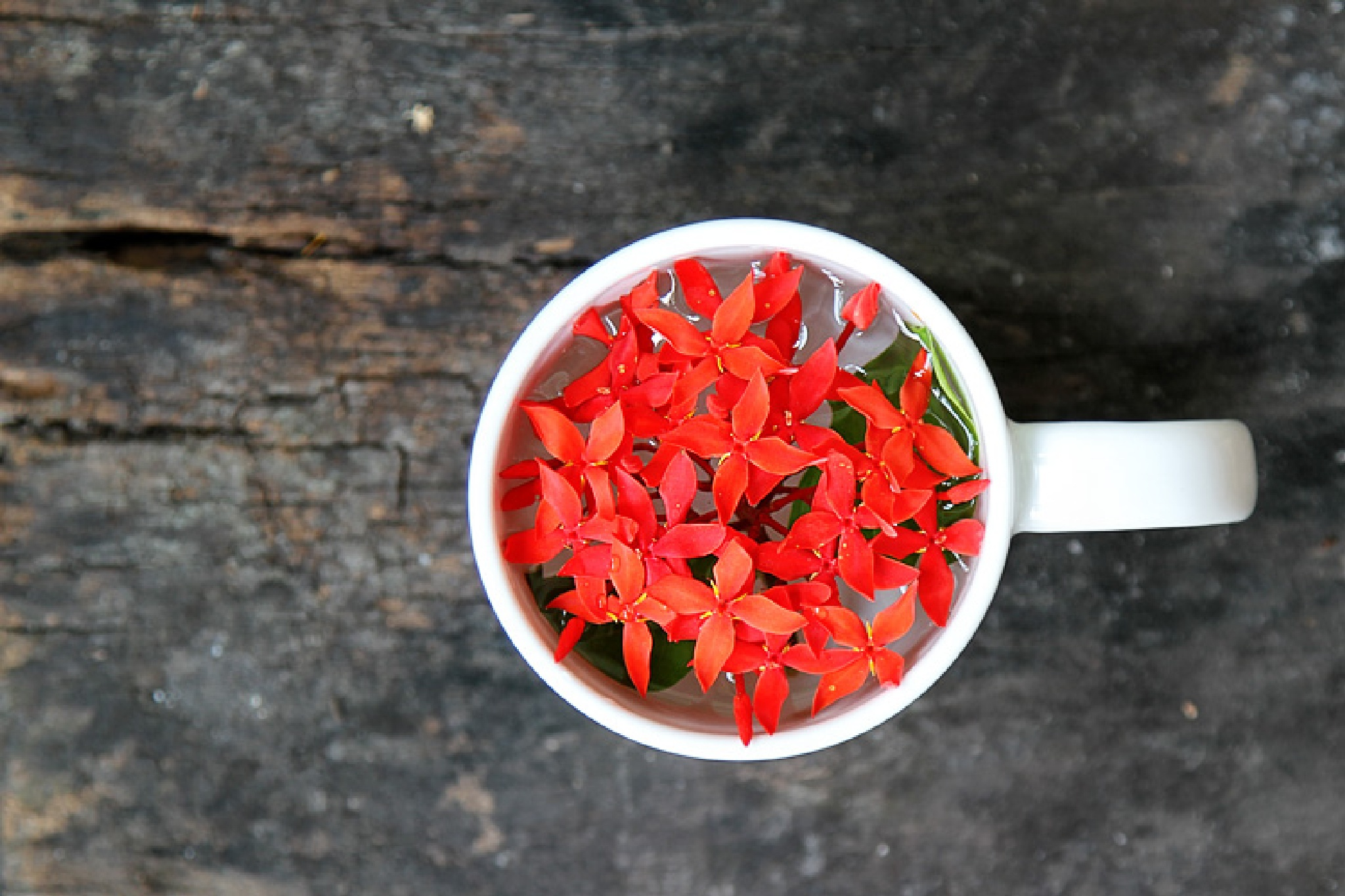 Red in the mug by linh