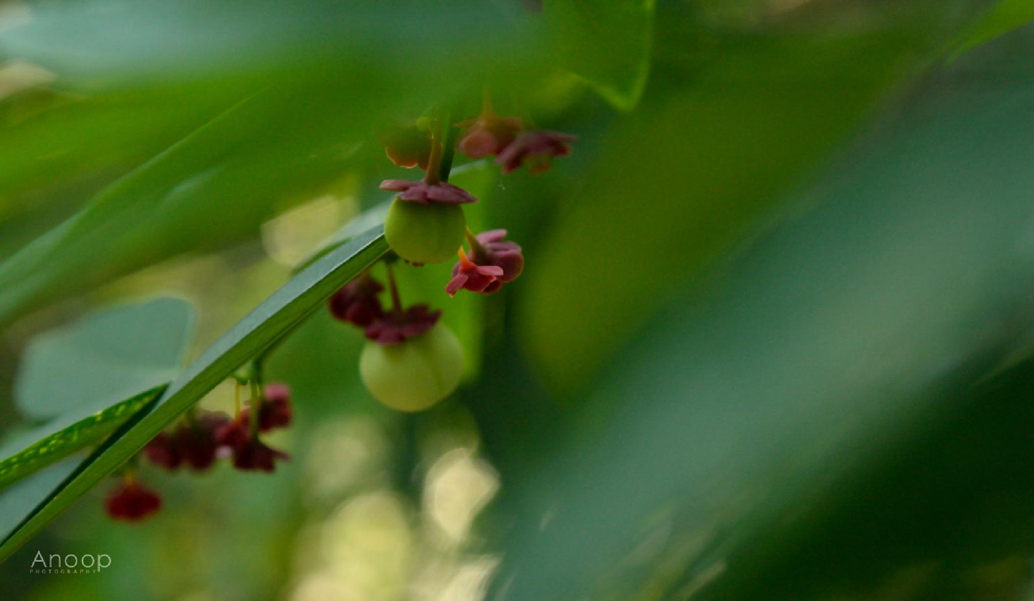 Photo in Nature #season #fruit #green #plant #flora