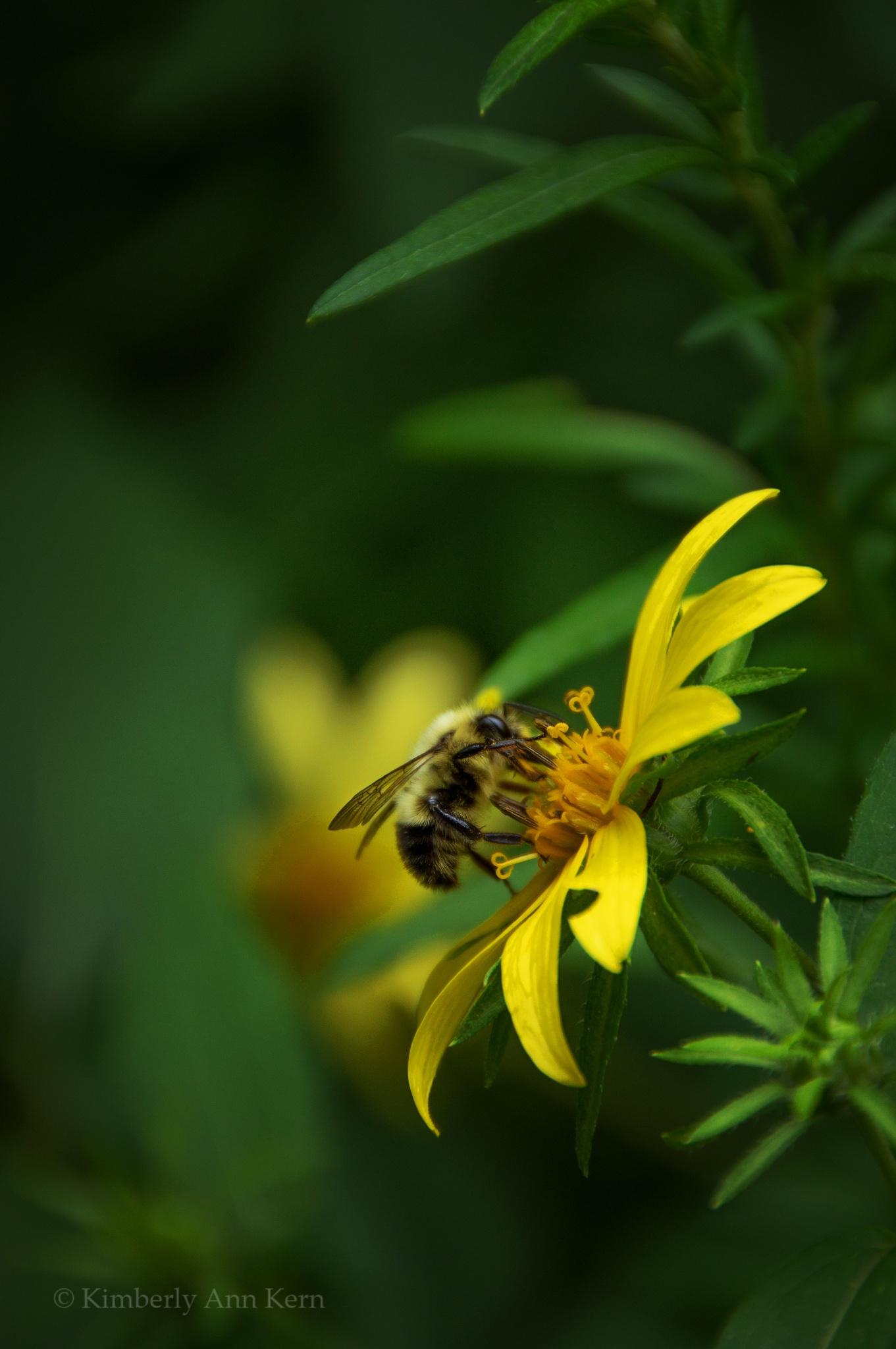 Photo in Nature #bee #flower #pollen #yellow #sweet #honey #green