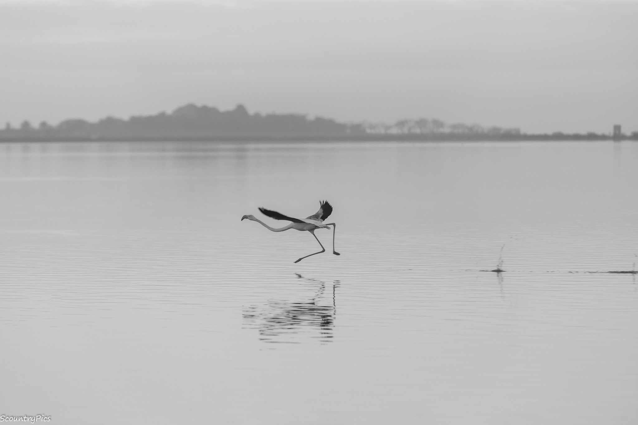 take off by Scountry Salim