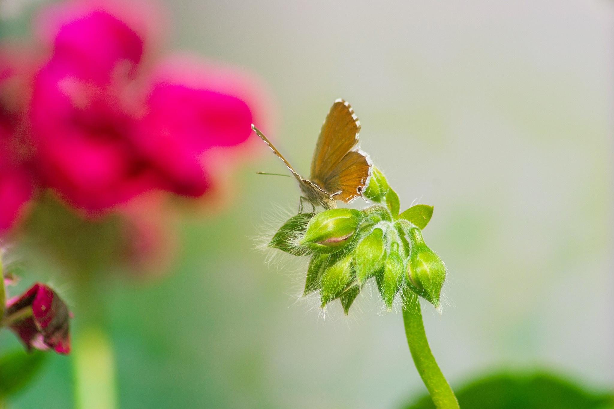 butterfly by MariAdagioChroma