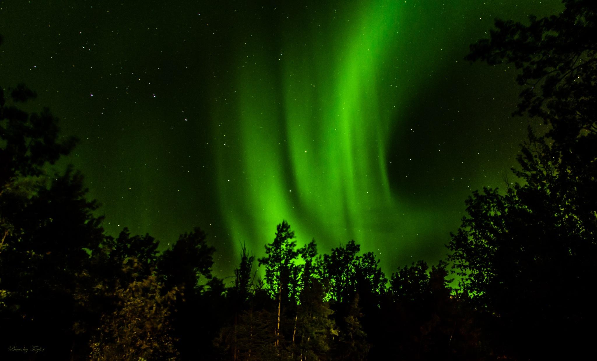 Aurora's Through The Trees by BeverleyTaylor