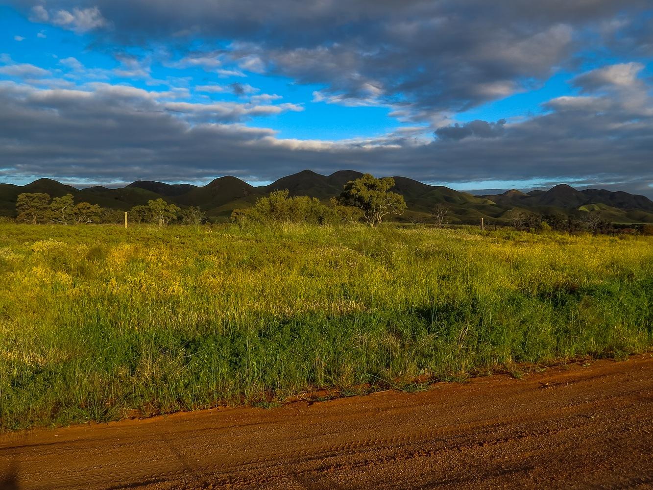 Twilight on Golden Fields by Jan Taylor