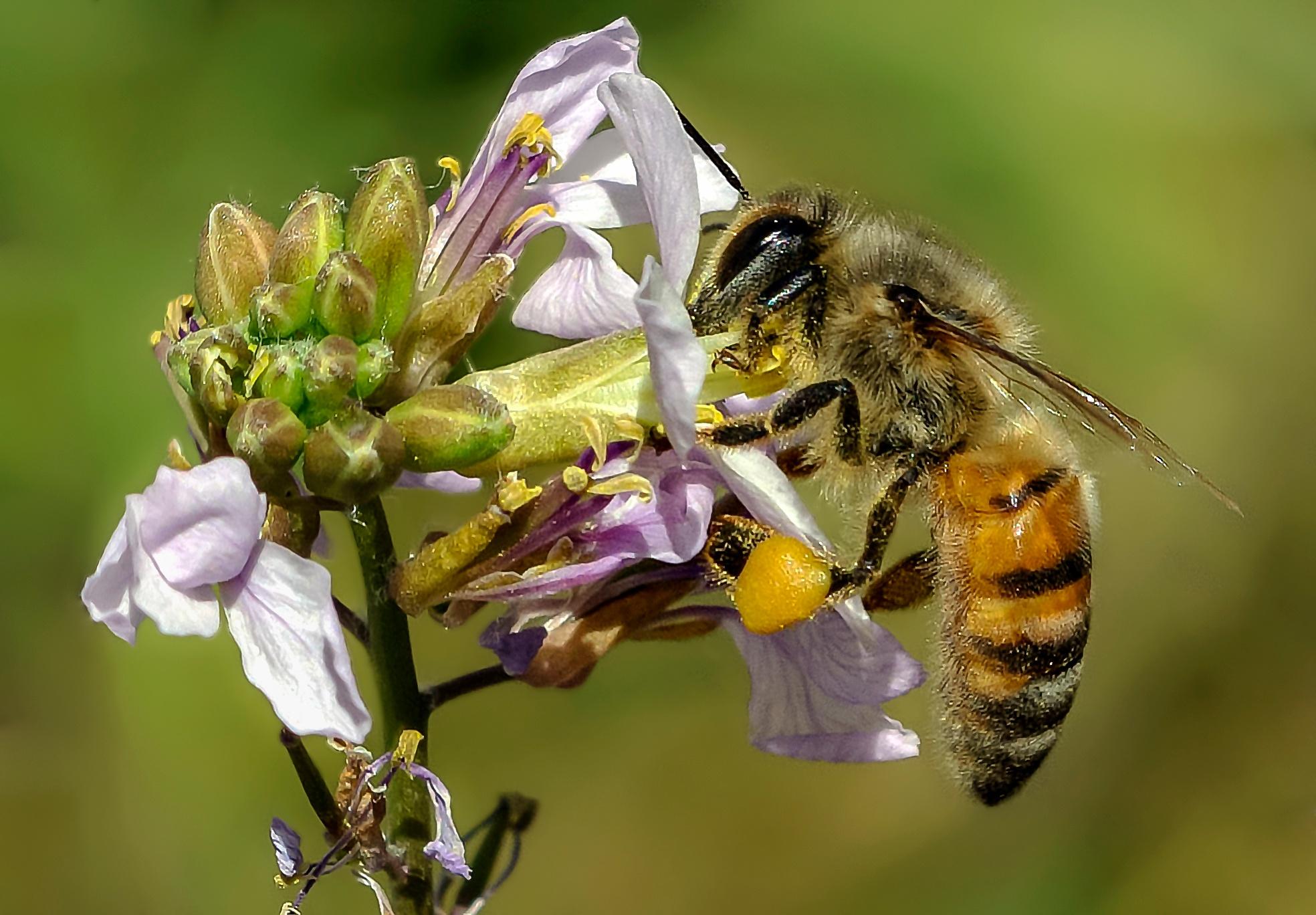 Honey Bee. by Omar AL-NAAS