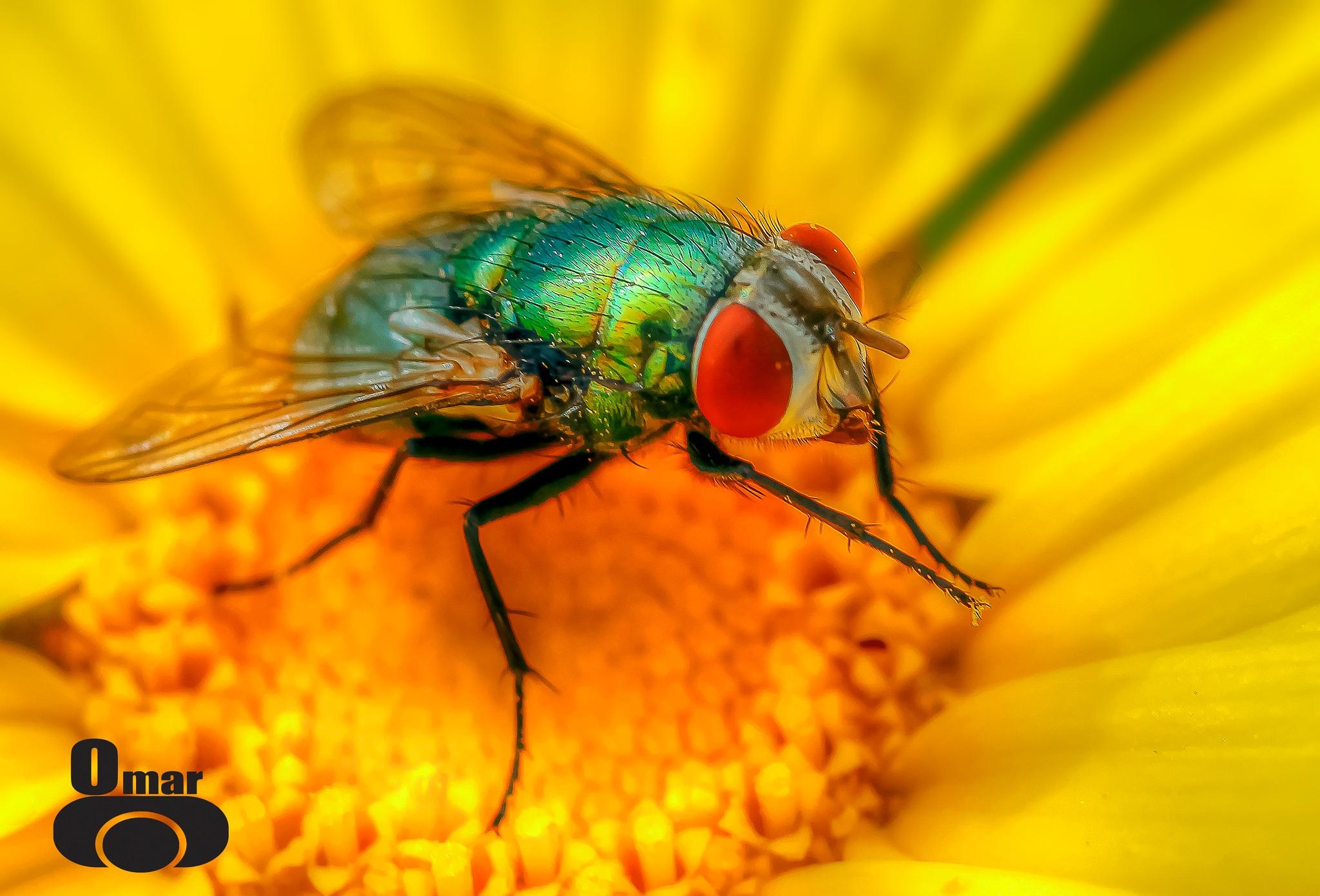 Fly. by Omar AL-NAAS