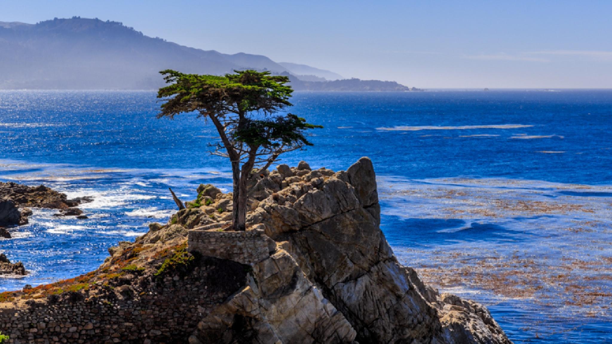 Lone Cyprus Tree by axnahum