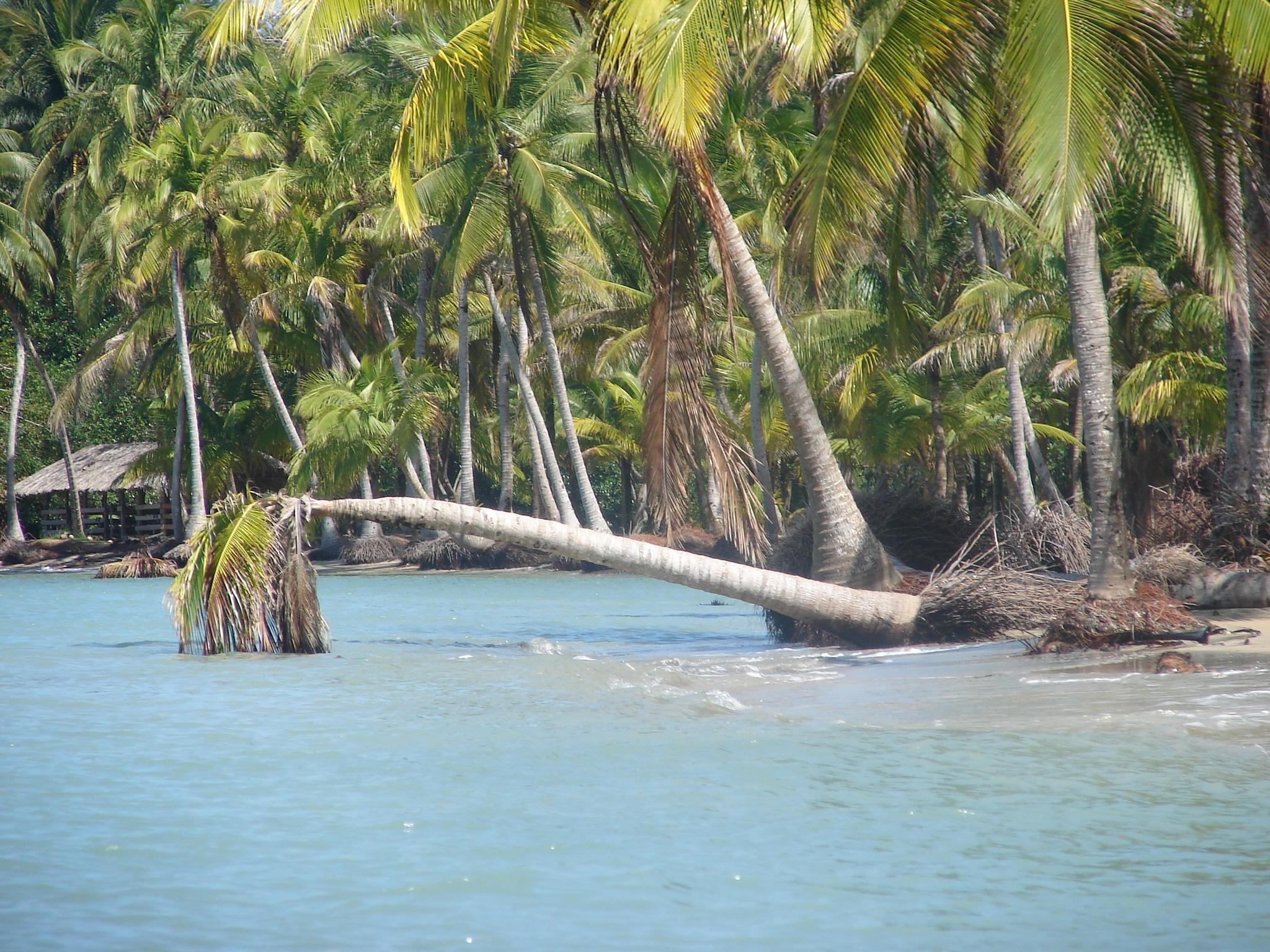 Sea Panama by Simona Salvuccelli Ranchi