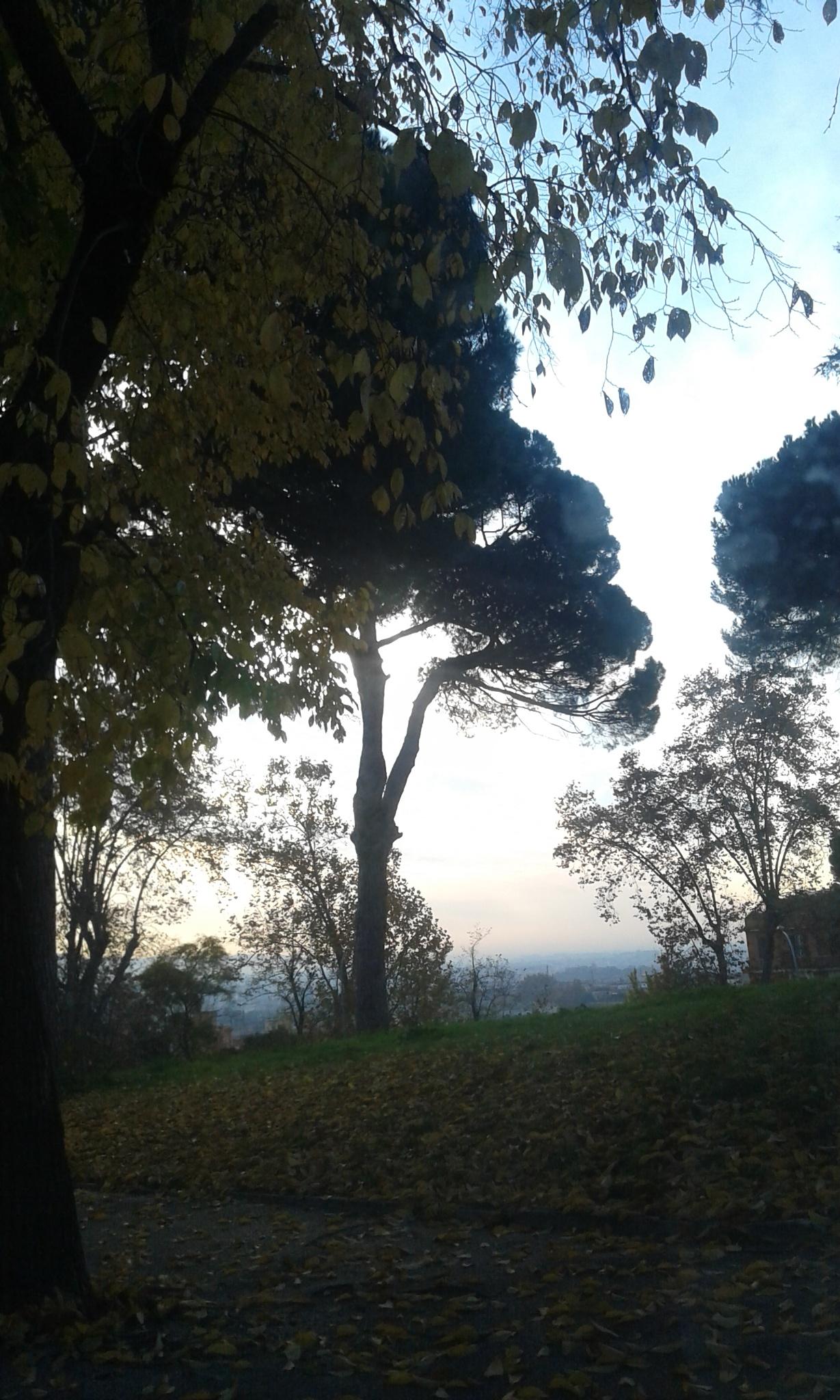 Roma by Simona Salvuccelli Ranchi