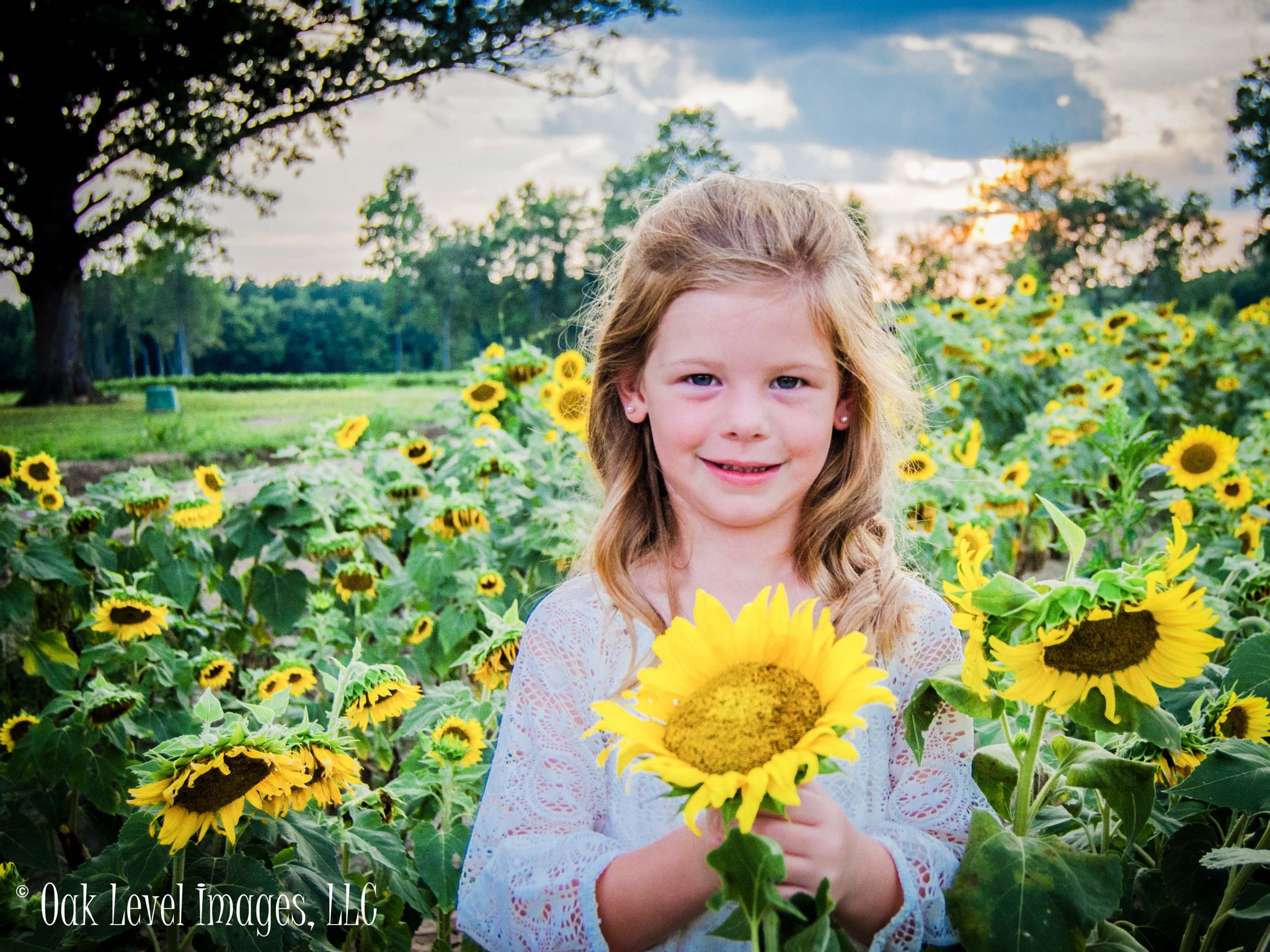 Ginger in the Sunflowers by oaklevelimages