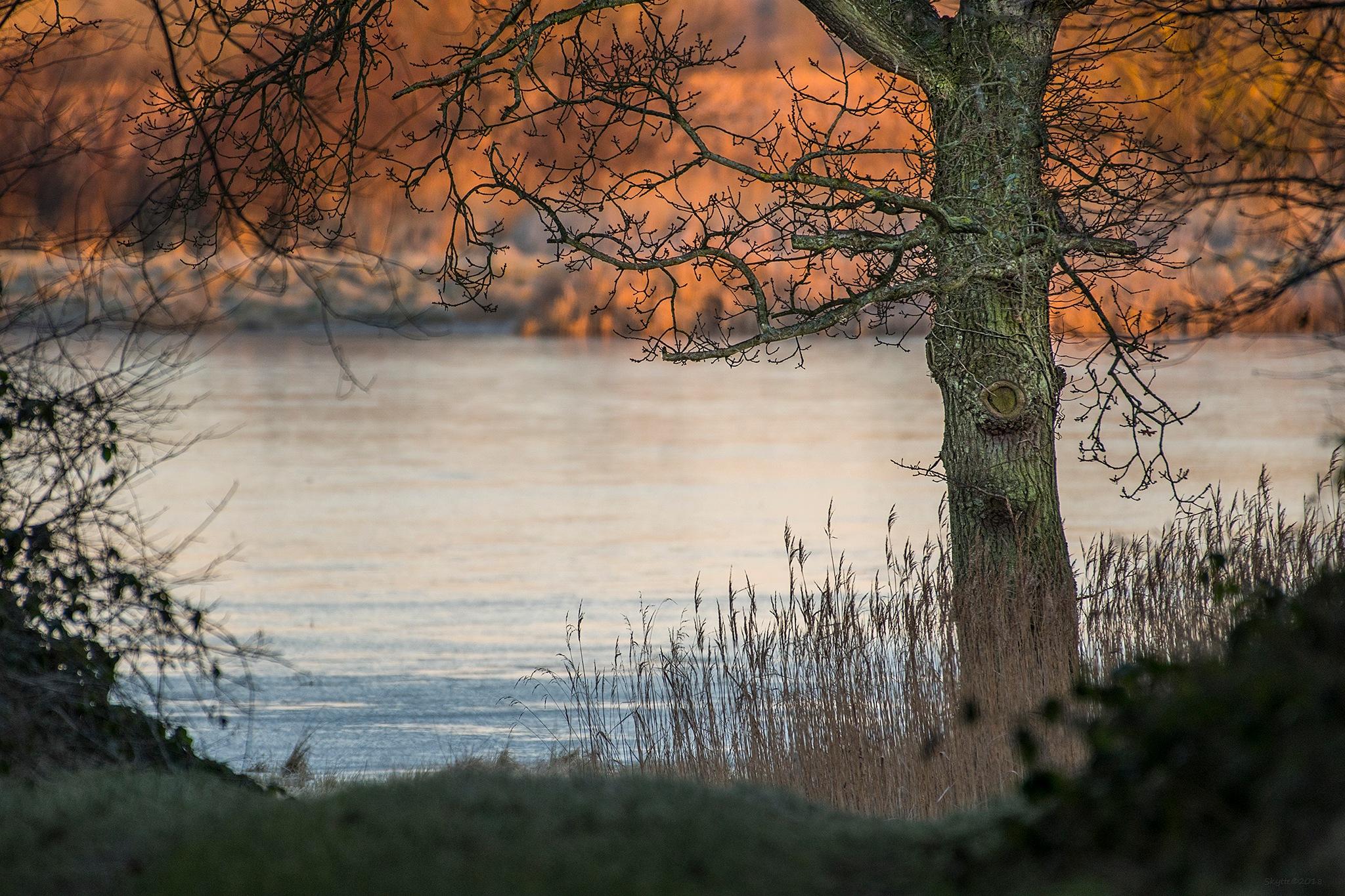 The Oak. by Keld Skytte Petersen