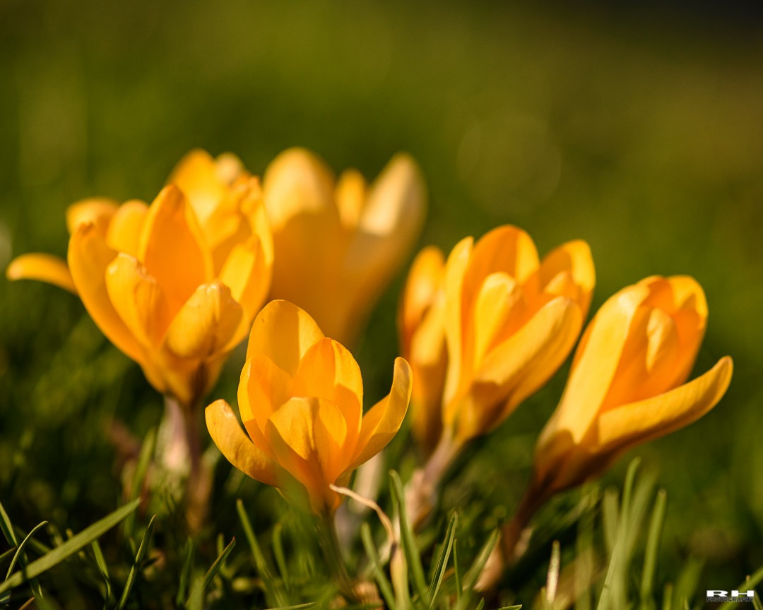 Spring is in the air by ⭐ rhphotography