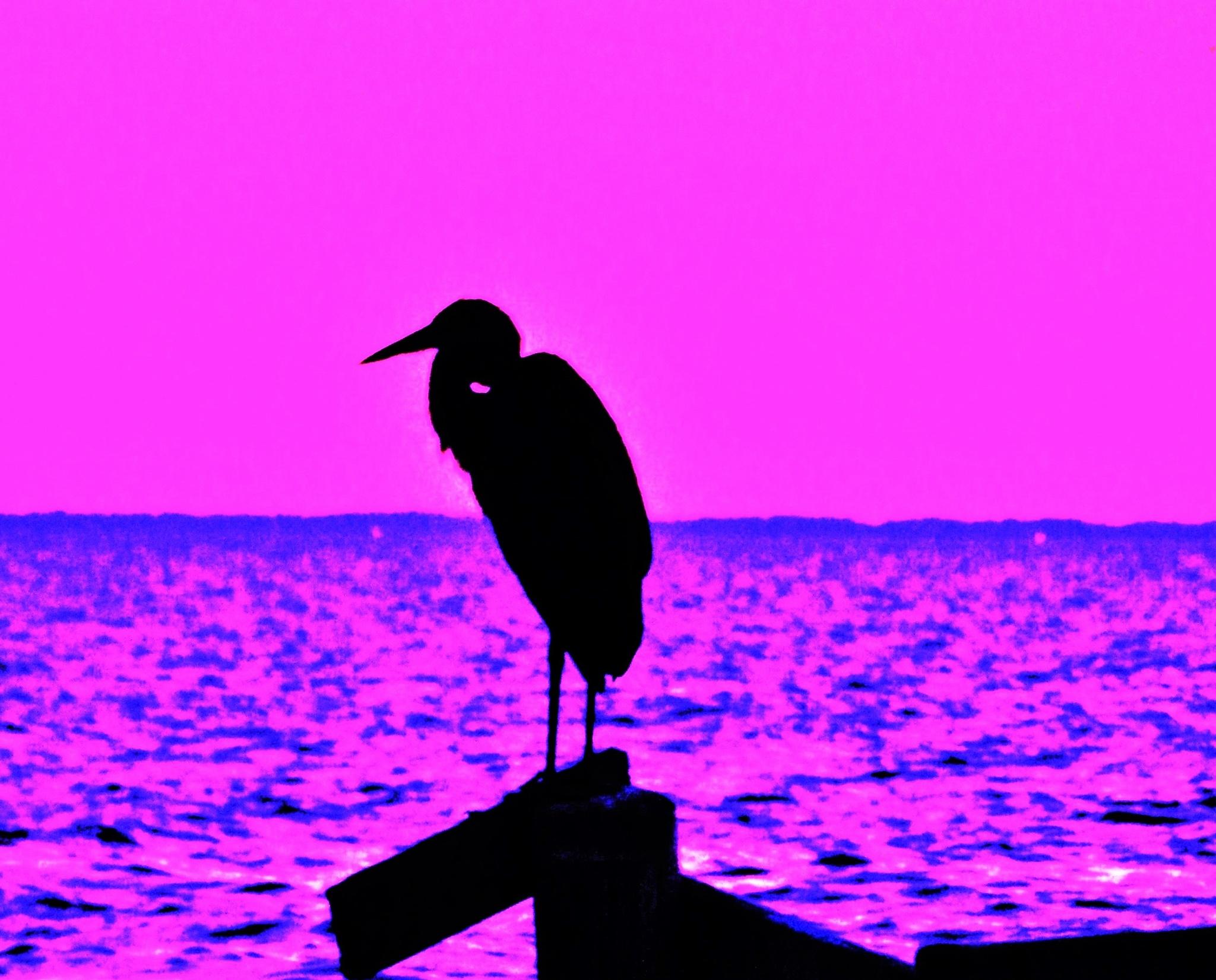 purple choice by jajapraha