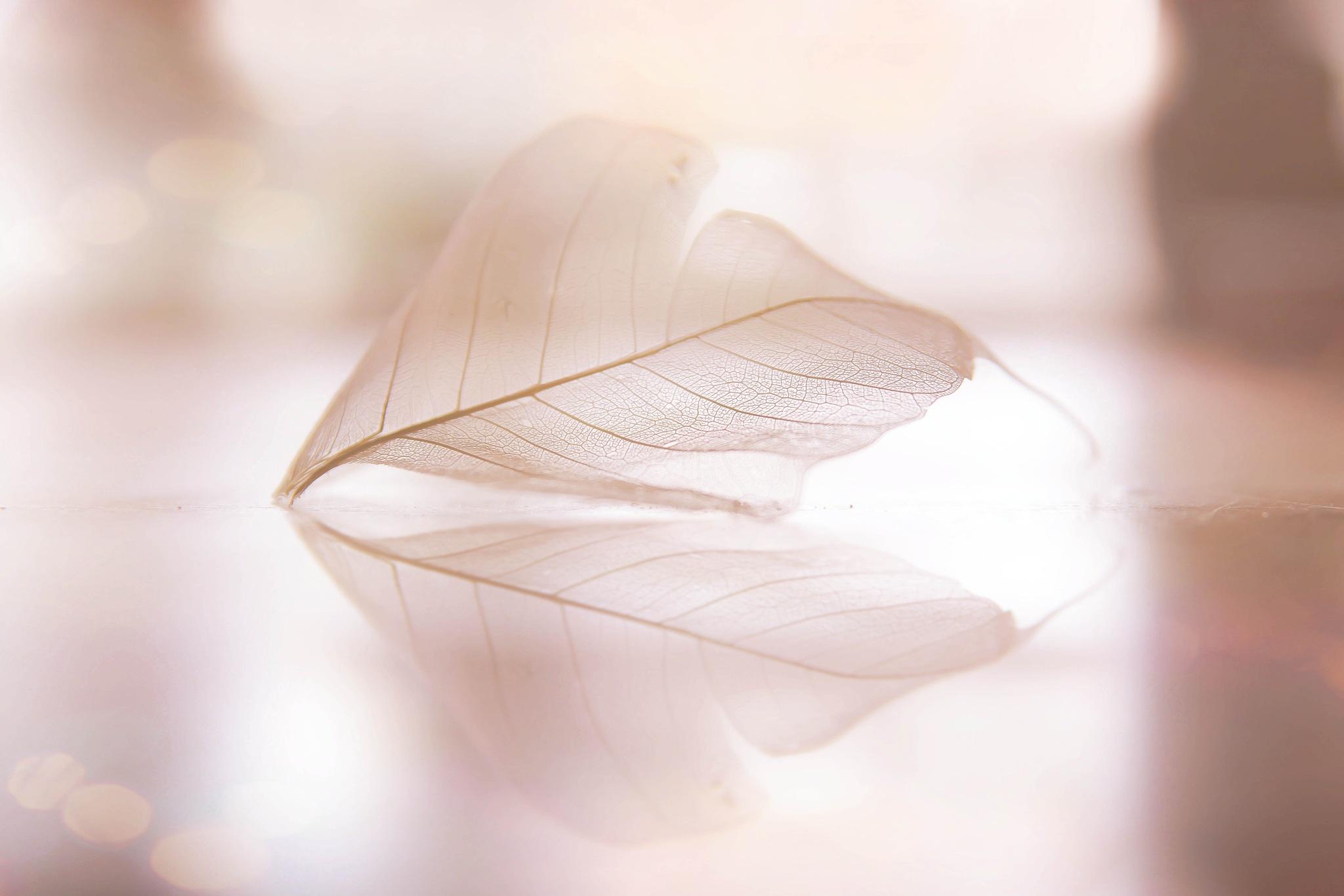 light reflection by MarissaJane