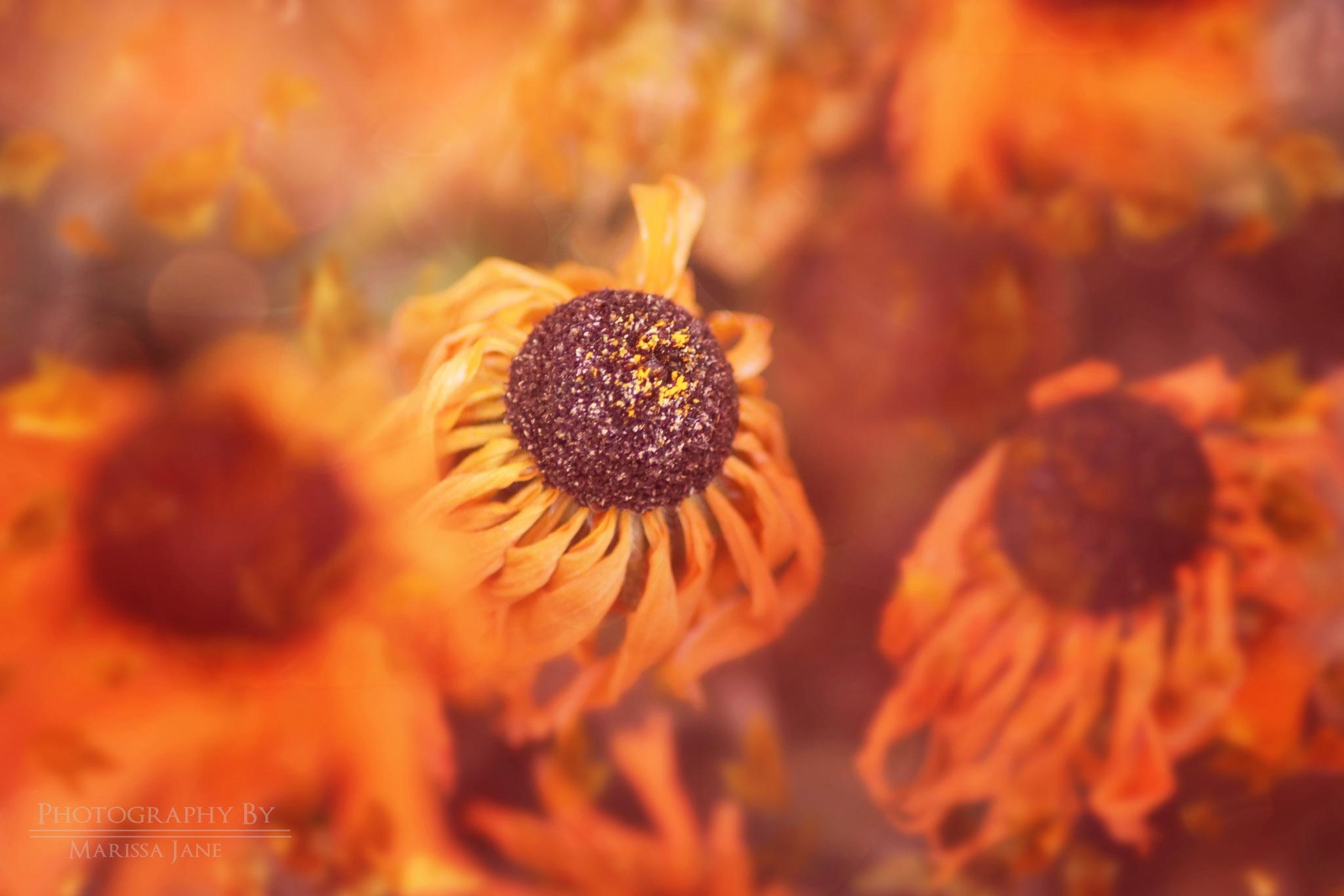 Light up nature  by MarissaJane